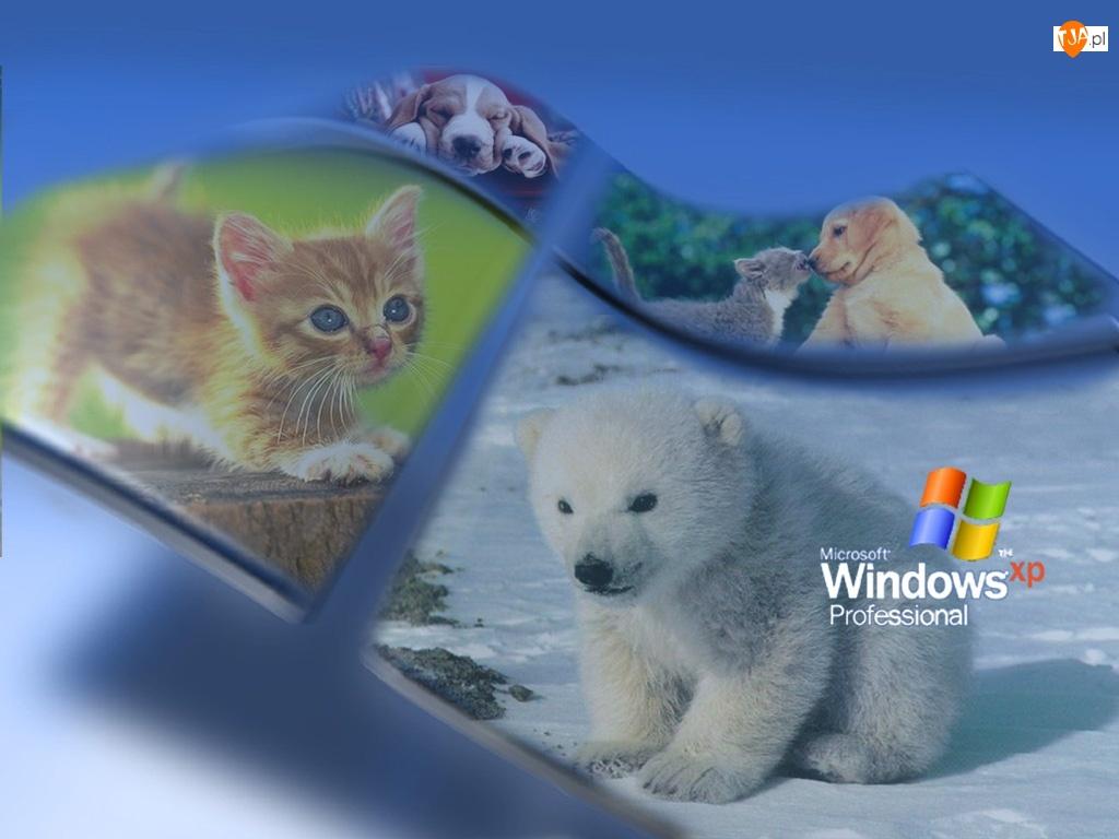 Zwierzęta, System, Windows, Operacyjny, Xp