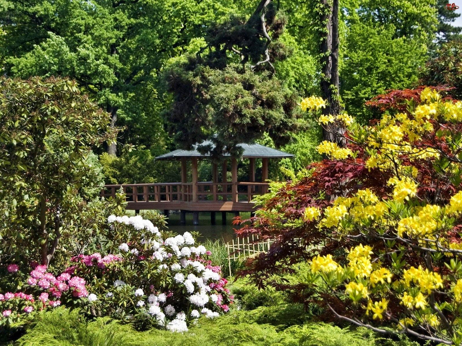 Park, Rododendrony, Altana, Kolorowe