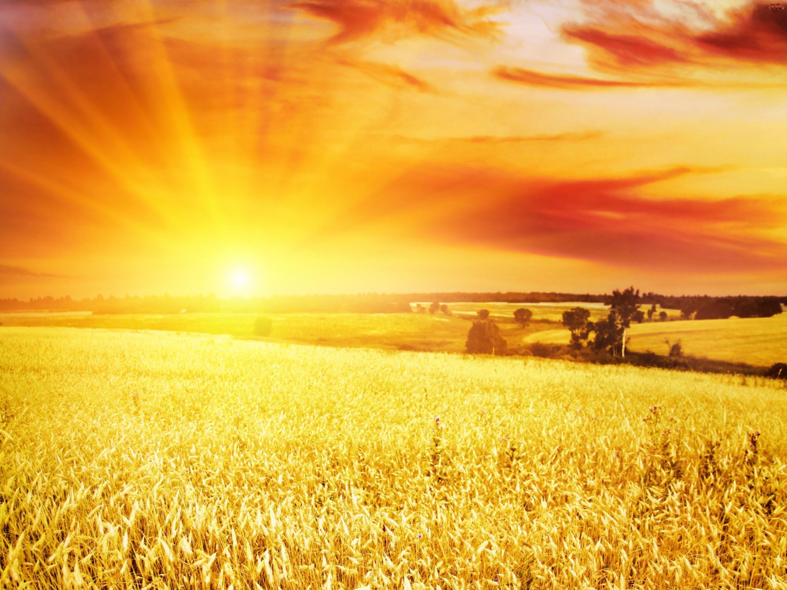 Zachód, Pole, Słońca, Promienie