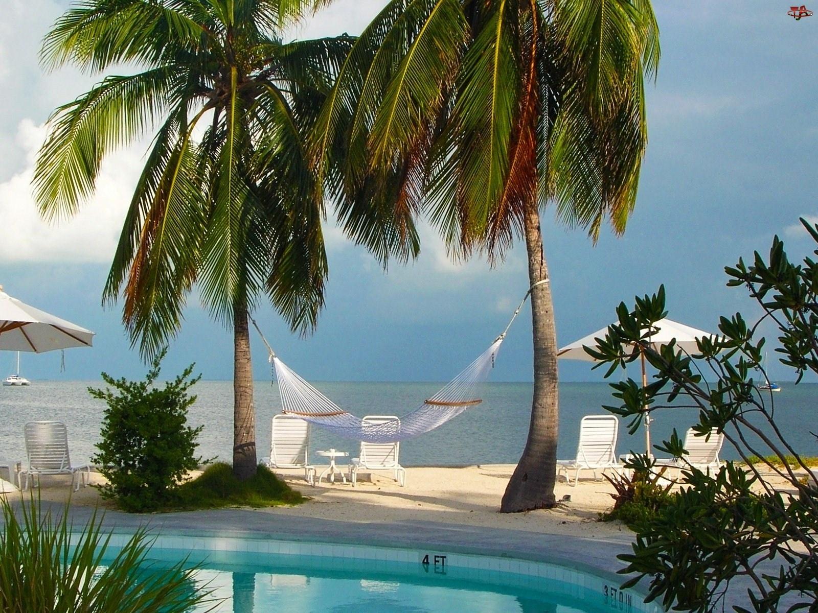 Hamak, Plaża, Palmy