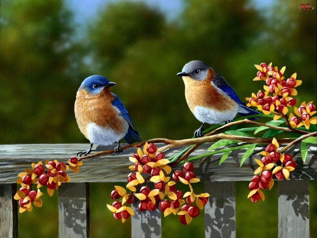 Dwa, Malarstwo, Ptaki, Kwiaty