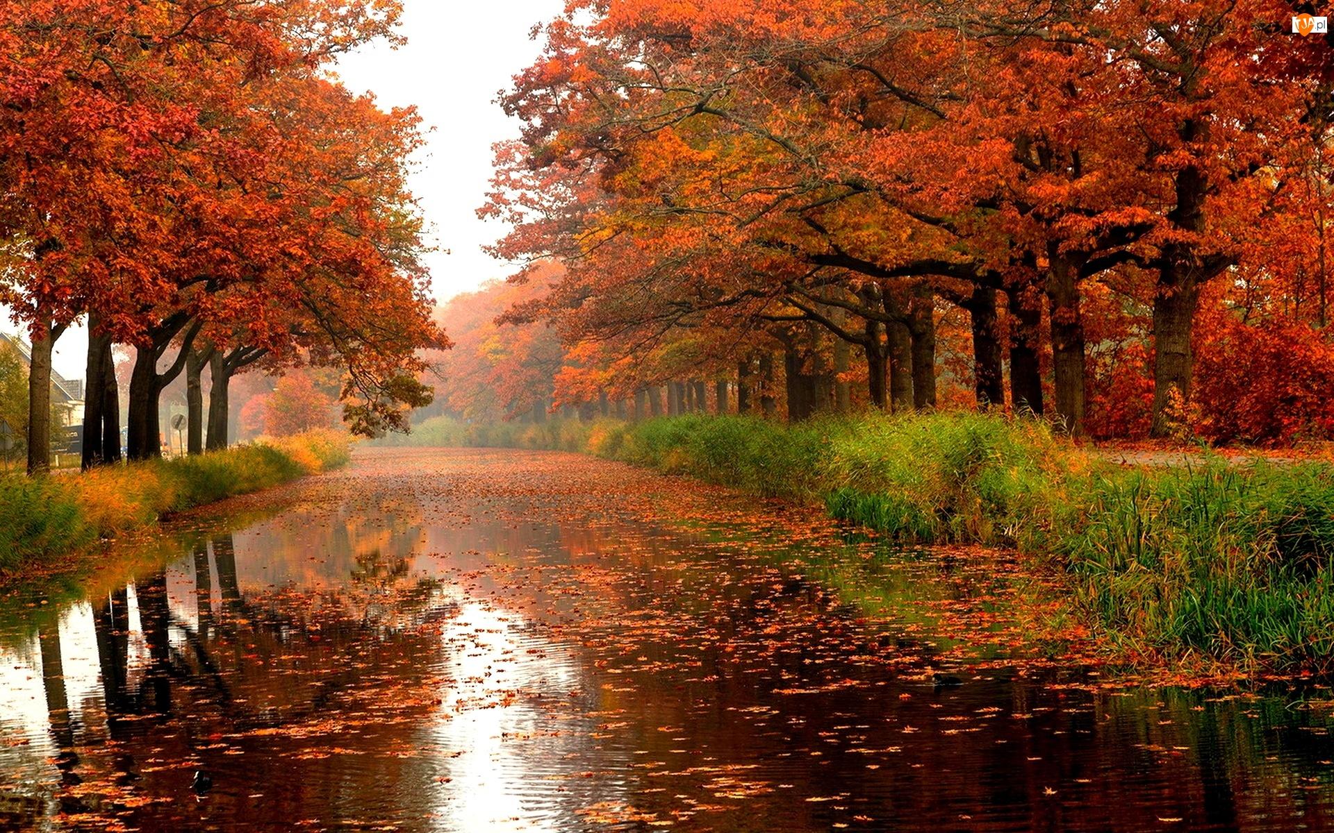 Rzeka, Drzewa, Liście
