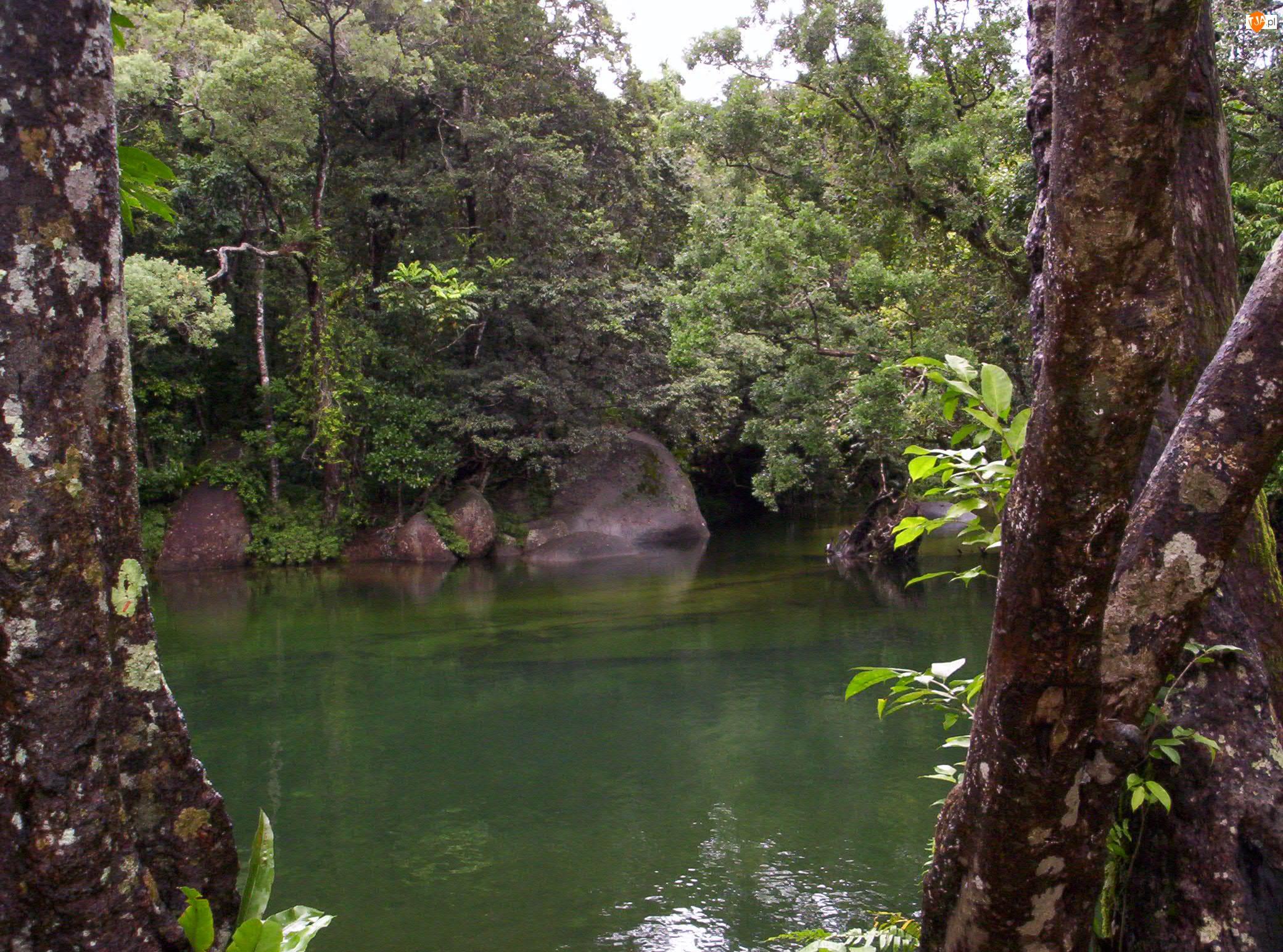 Australia, Rzeka, Kamienie, Drzewa, Babinda