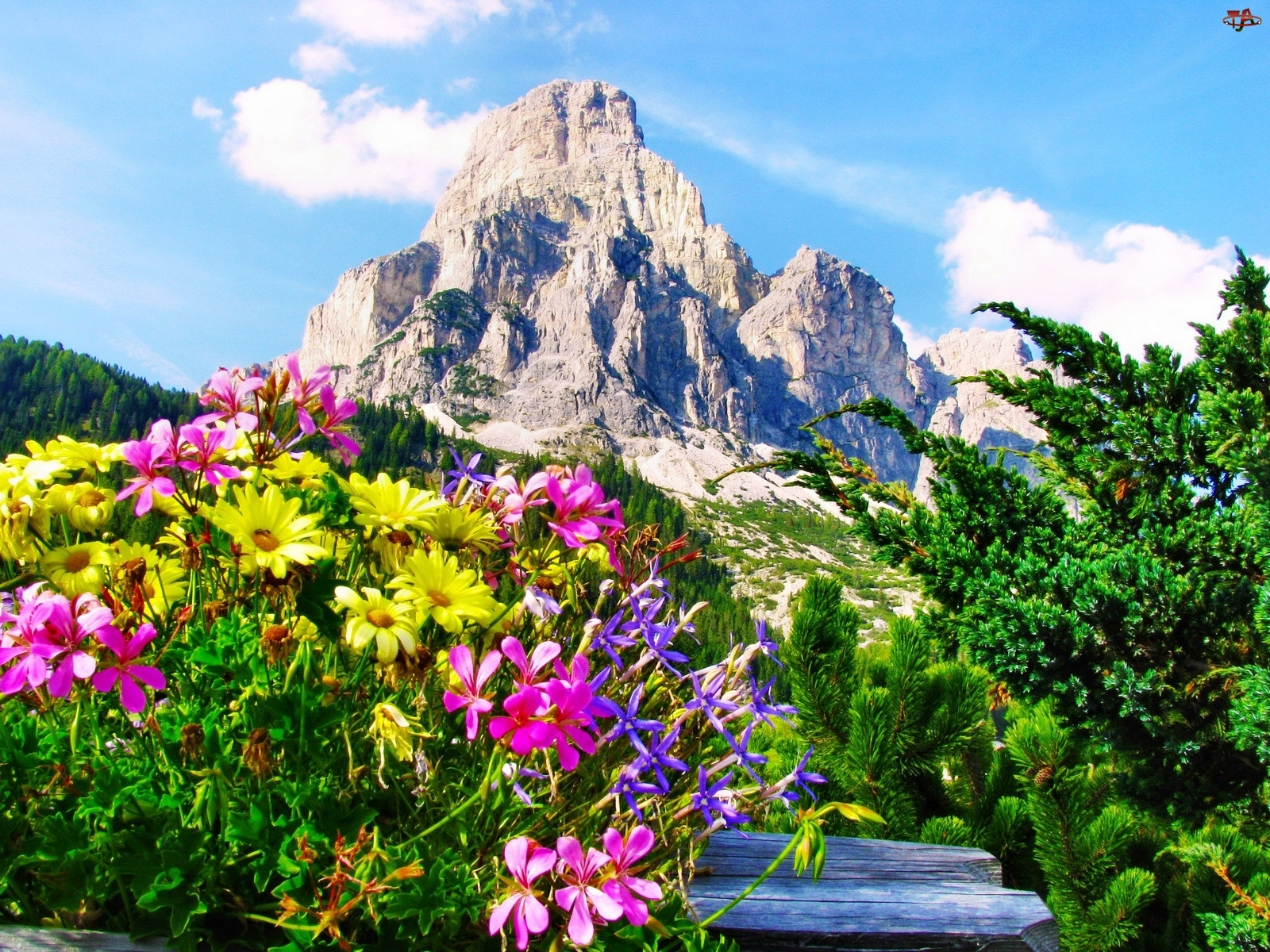 Kwiaty, Góra, Iglaki