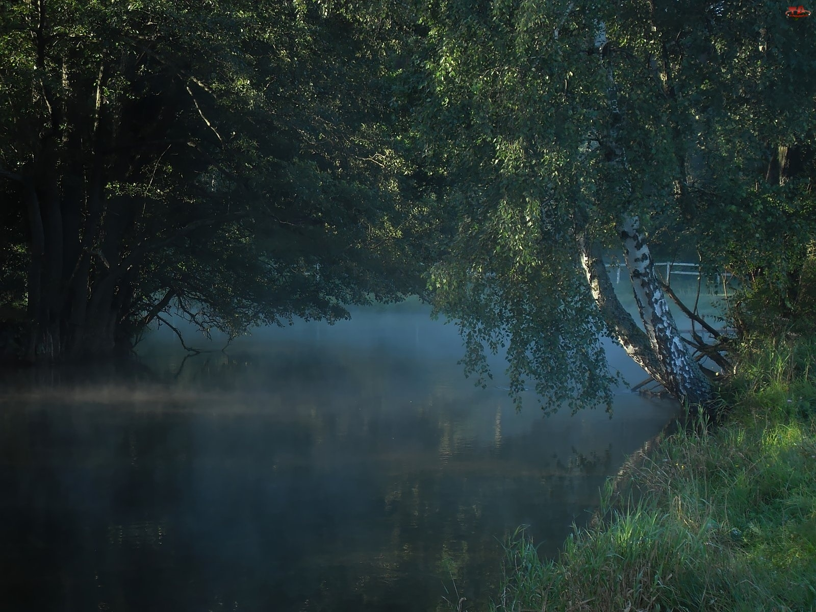 Trawa, Rzeka, Brzoza, Mgła, Liście