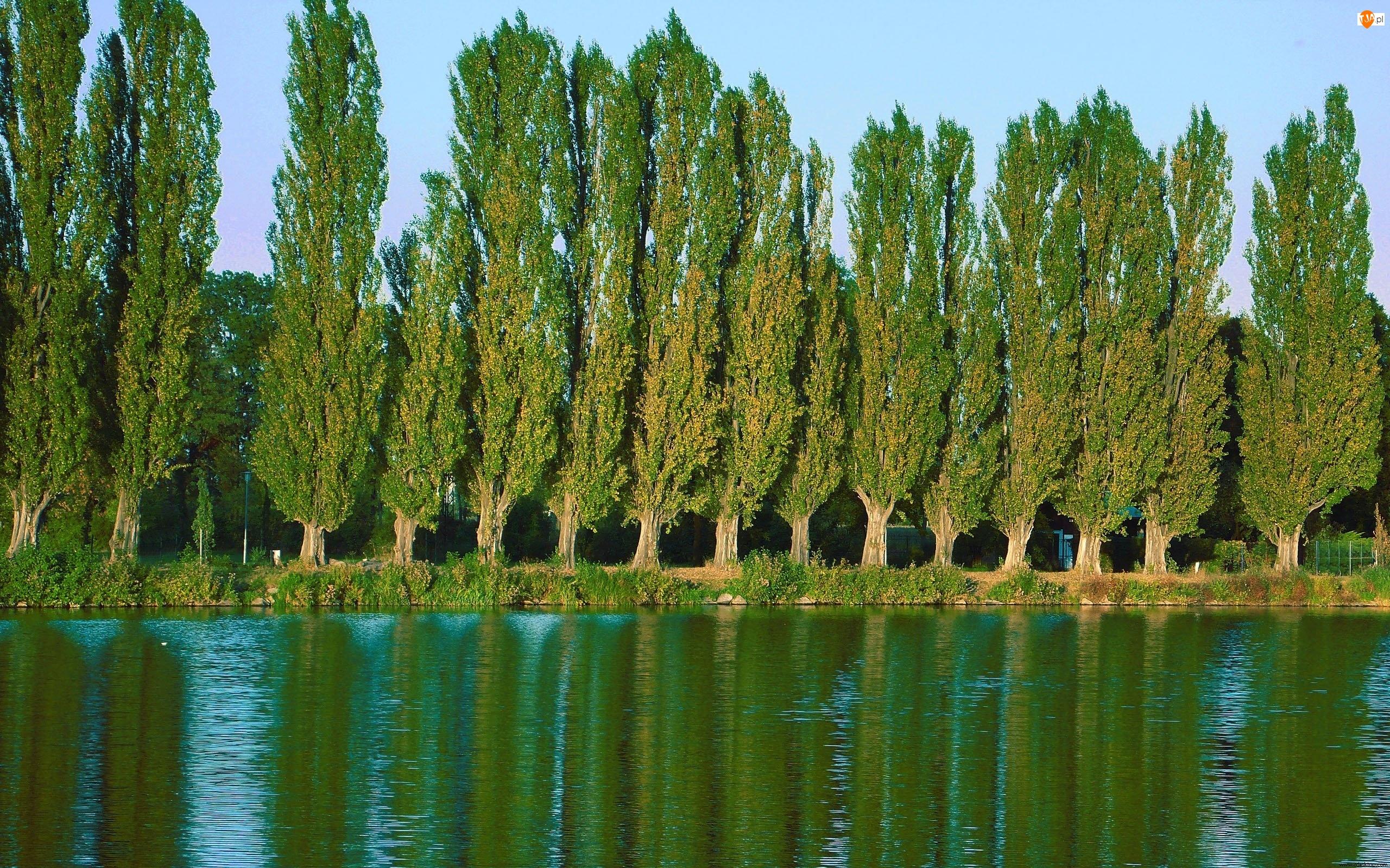 Rzeka, Topole