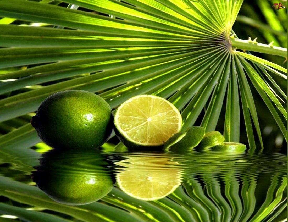 Palmy, Limonki, Liść