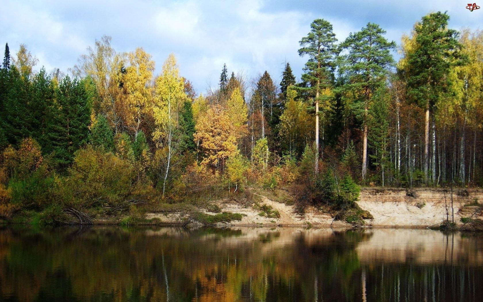 Jesień, Jezioro, Las