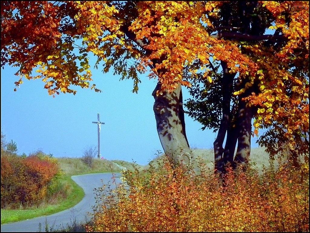 Krzyż, Jesień, Liście, Drzewa, Droga