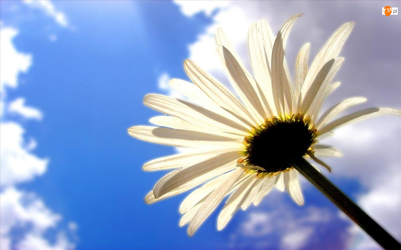 Chmury, Kwiat, Tle, Na, Nieba