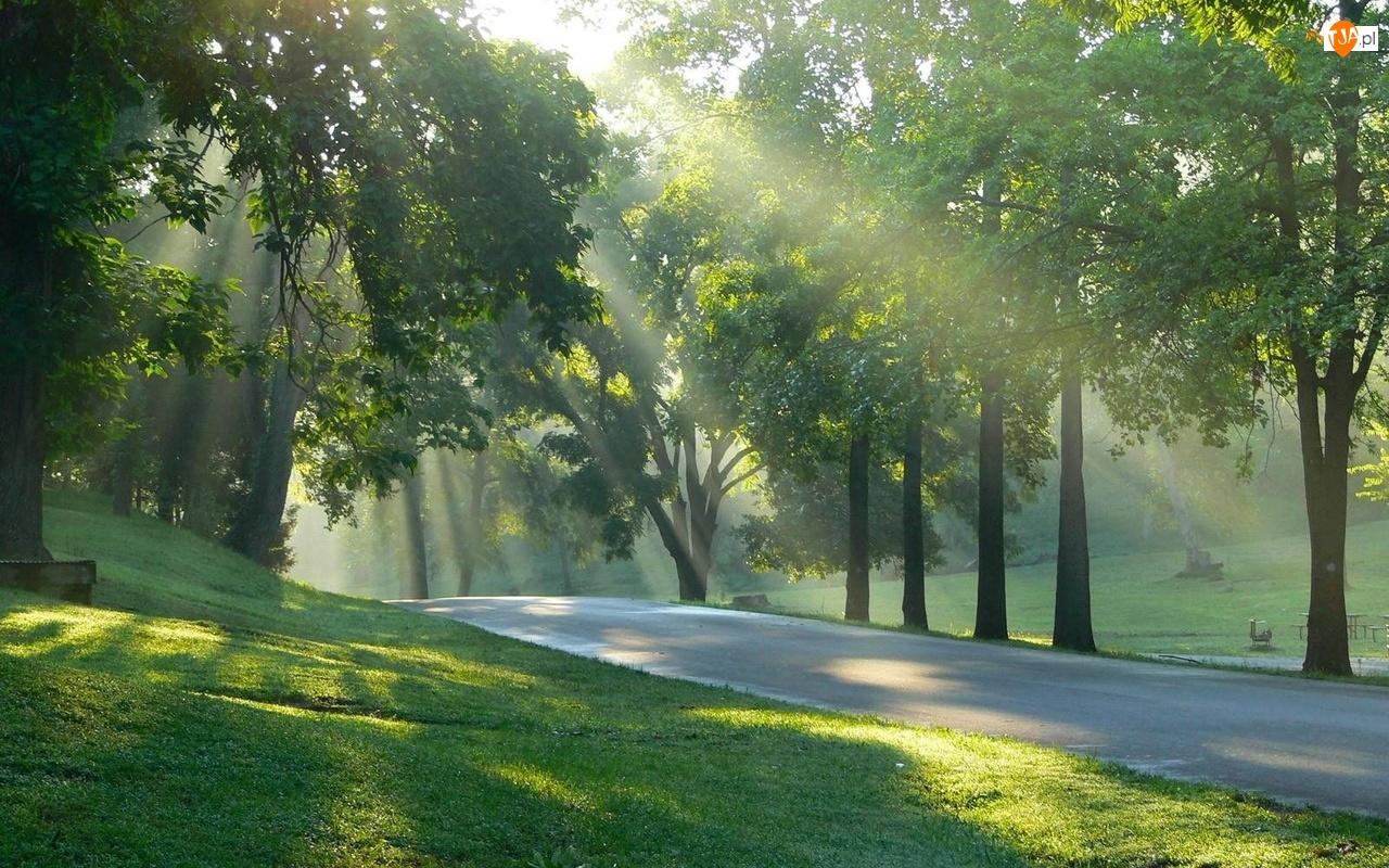 Przebijające, Park, Światło, Drzewa