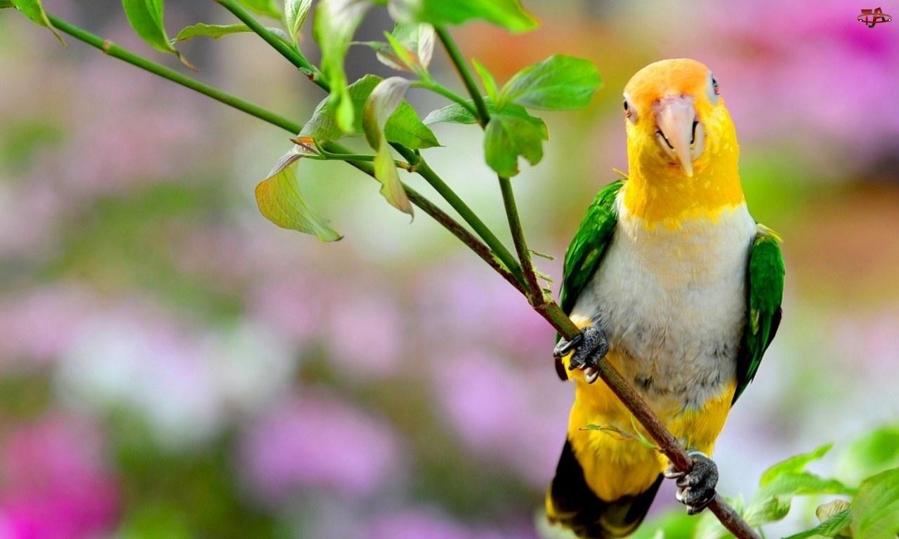 Gałązka, Śliczna, Papuga