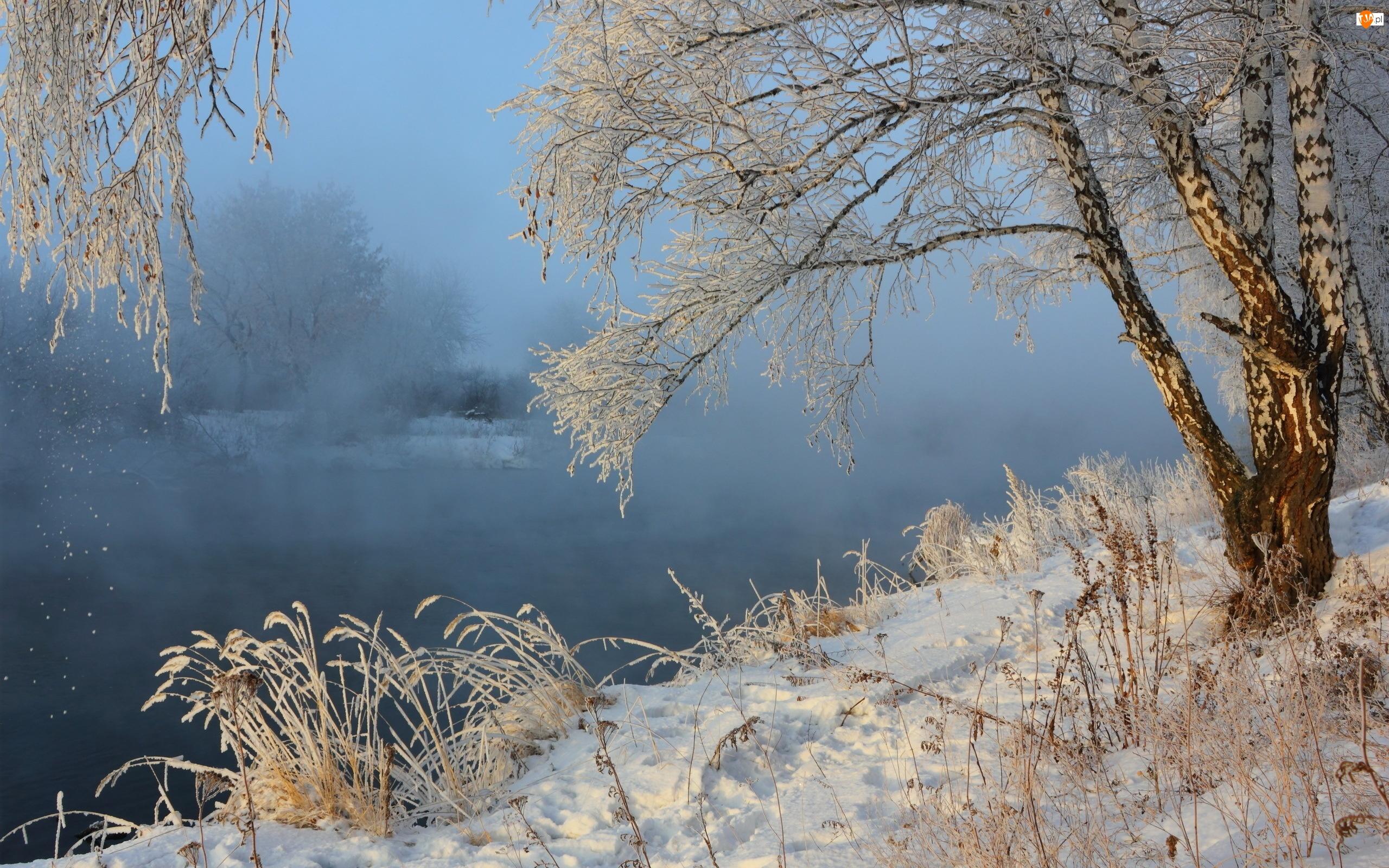 Zima, Rzeka, Brzoza, Mgła, Trawy