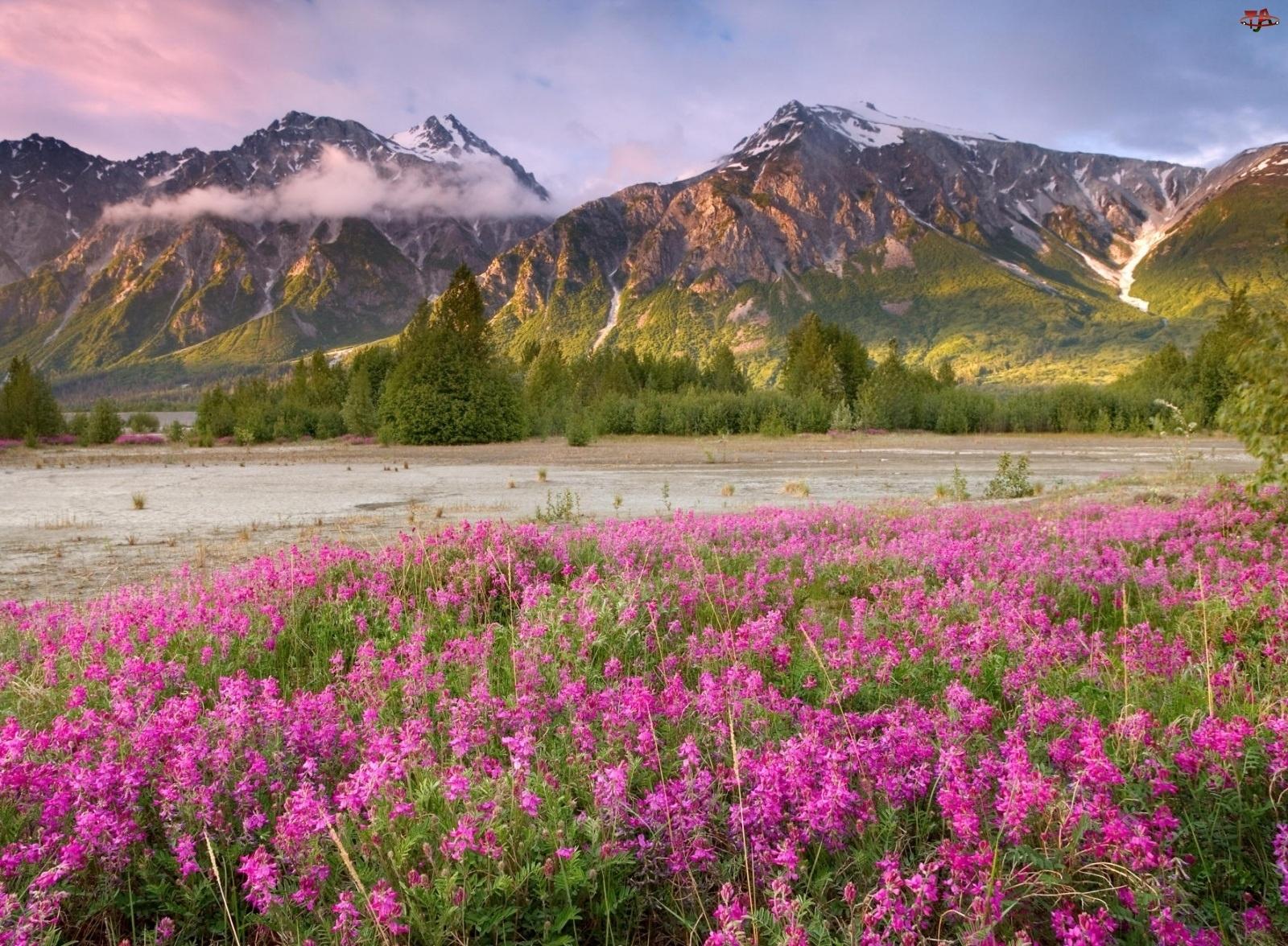 Góry, Kwiaty, Chmury, Drzewa