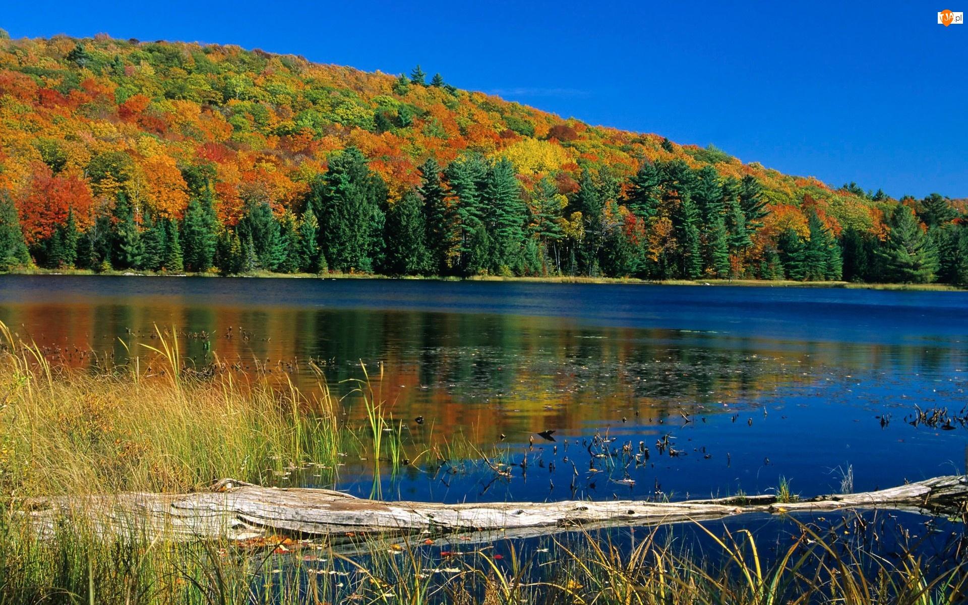 Jesień, Rzeka, Lasy