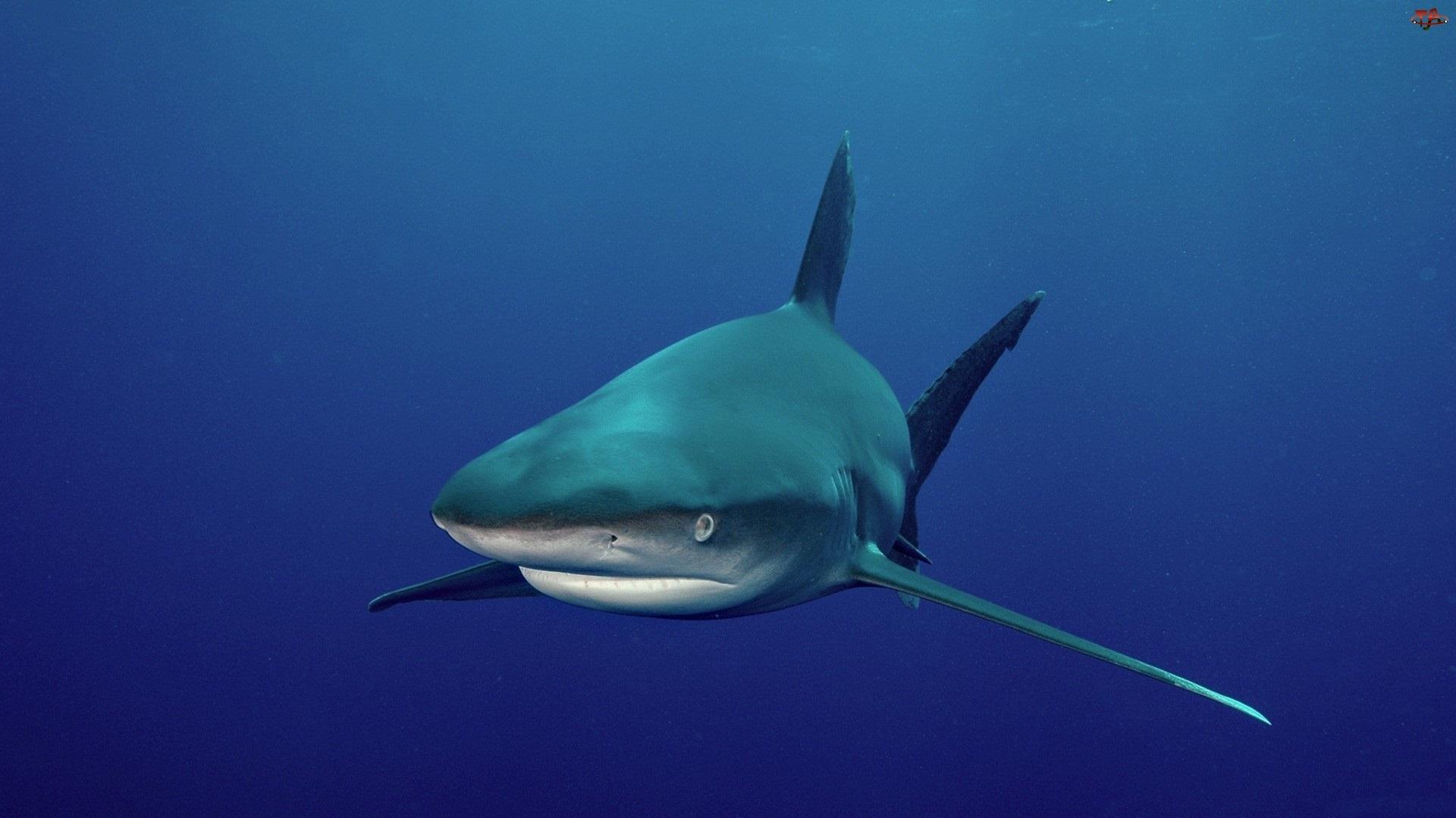 Rekin, Głębiny, Morskie