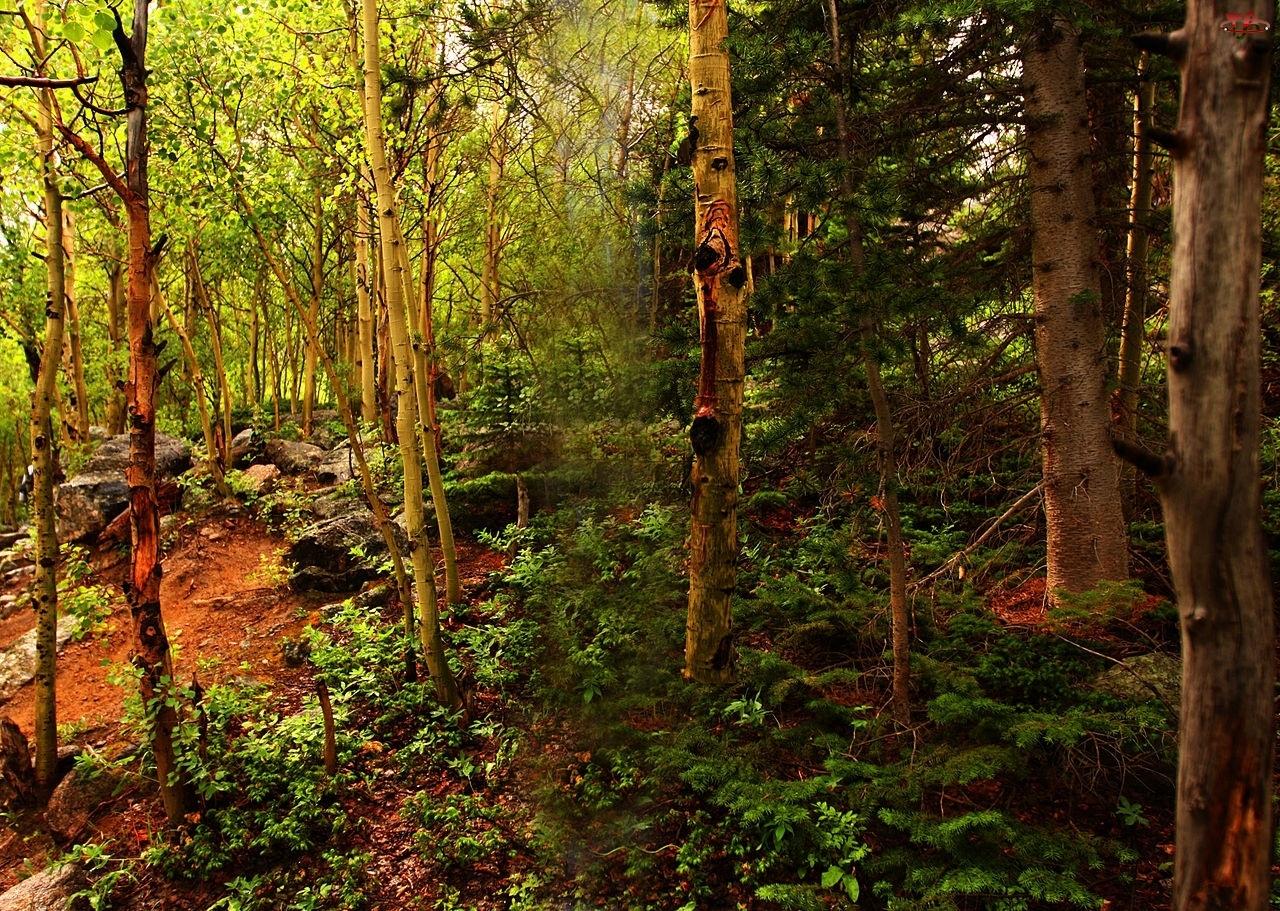 Las, Liściasty