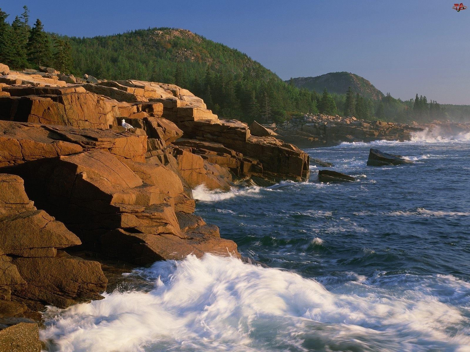 Góry, Acadia, Morze, Maine, Klify, Lasy