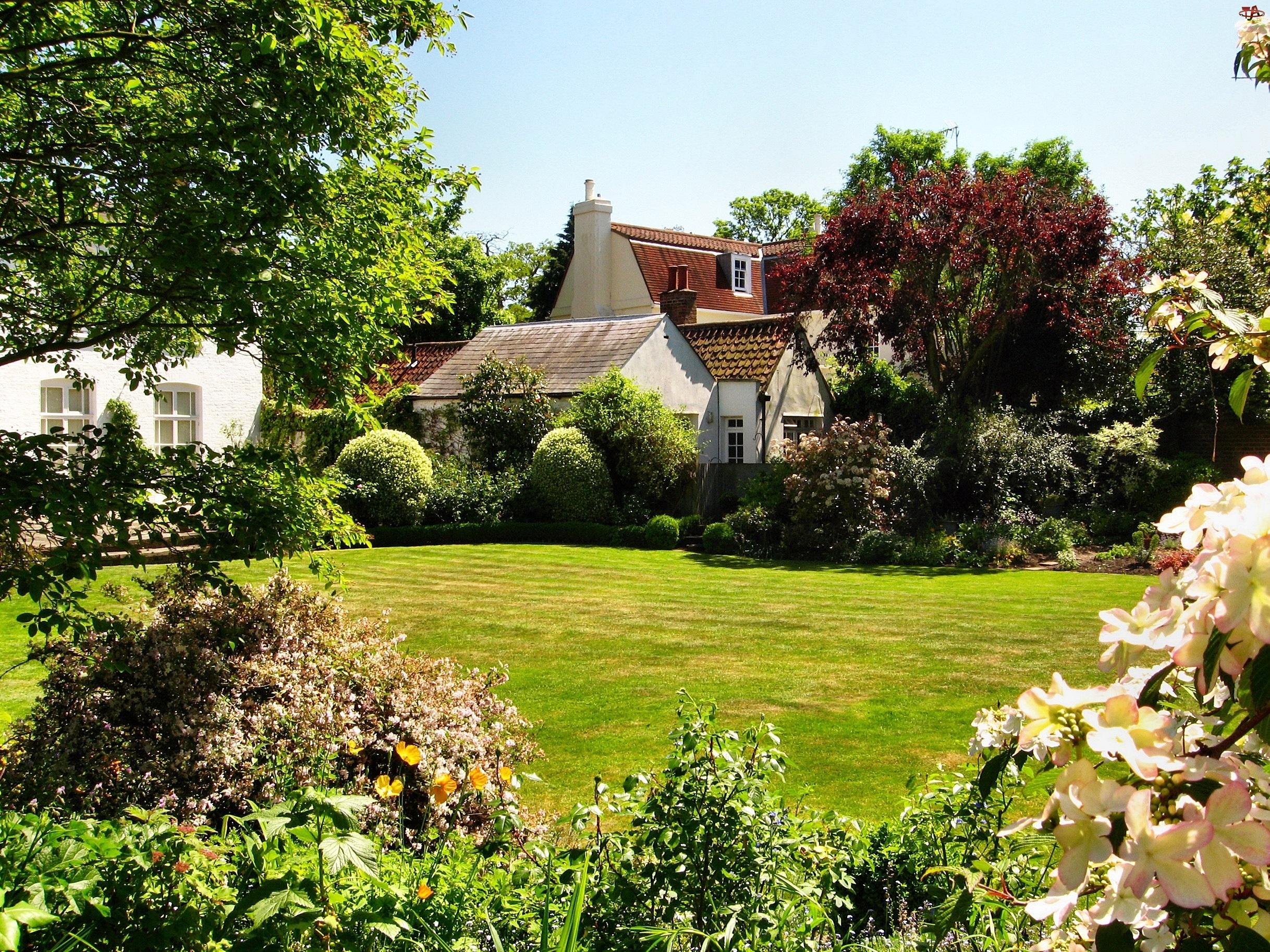 Anglia, Domy, Krzewy, Ogród, Kwiaty