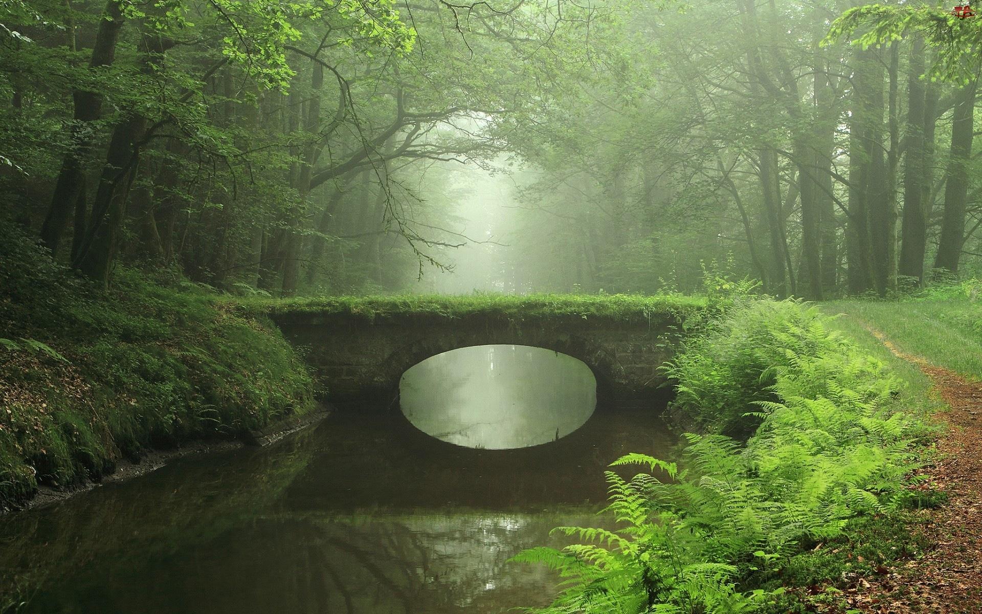 Paprocie, Rzeka, Most, Las, Mgła