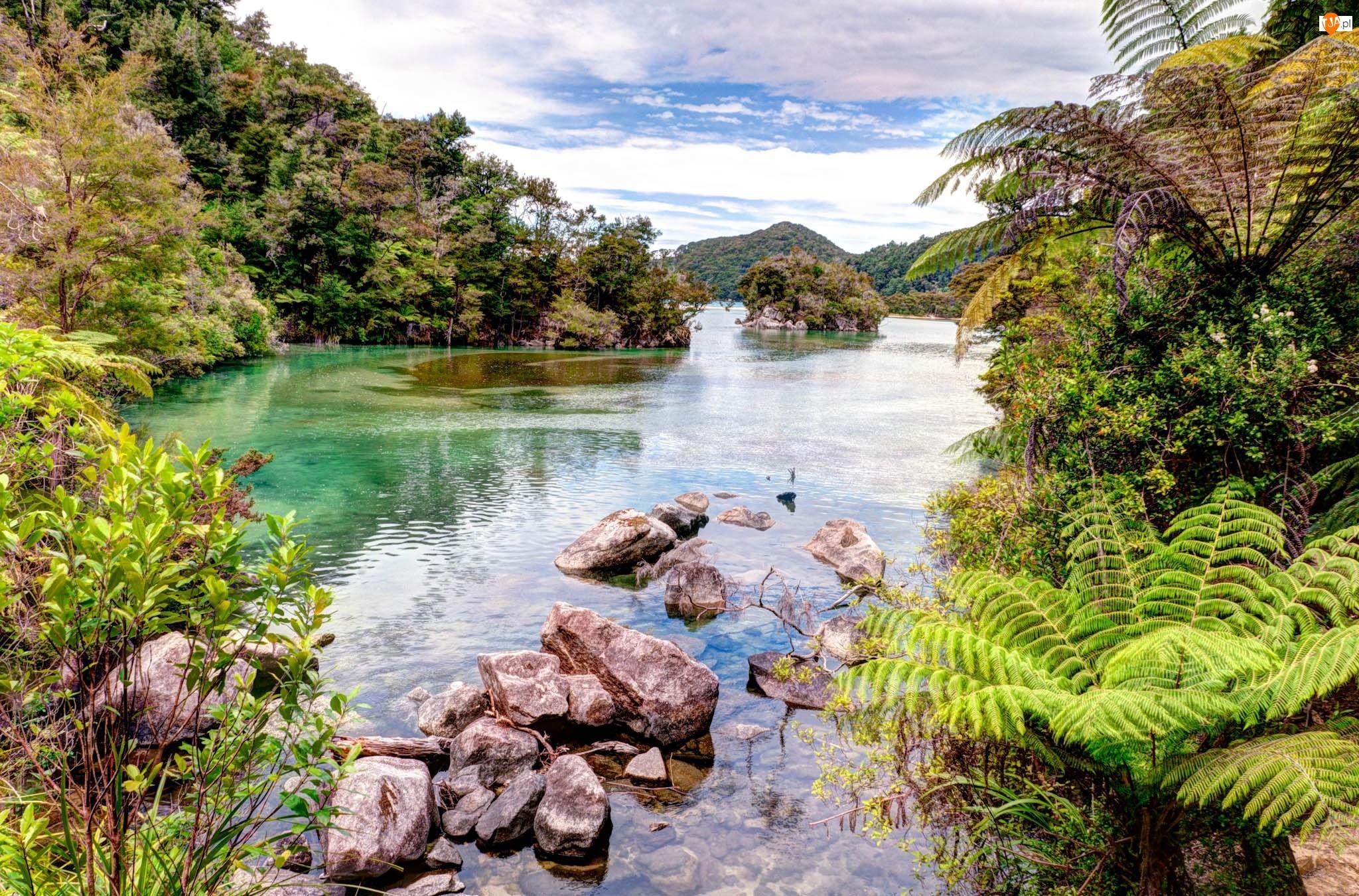 Lasy, Rzeka, Paprocie, Kamienie, Góry