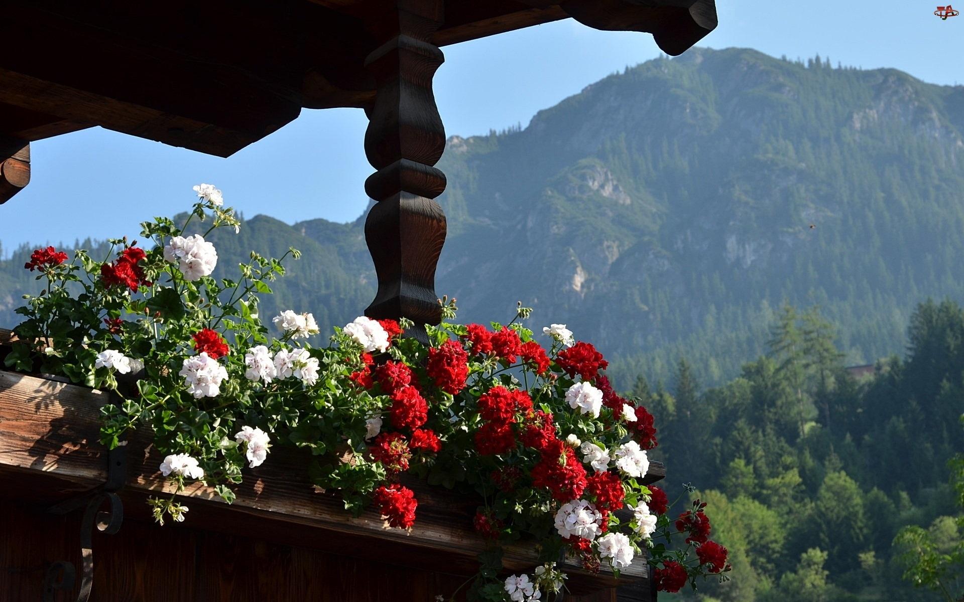Pelargonie, Austria, Taras, Góry Alpy