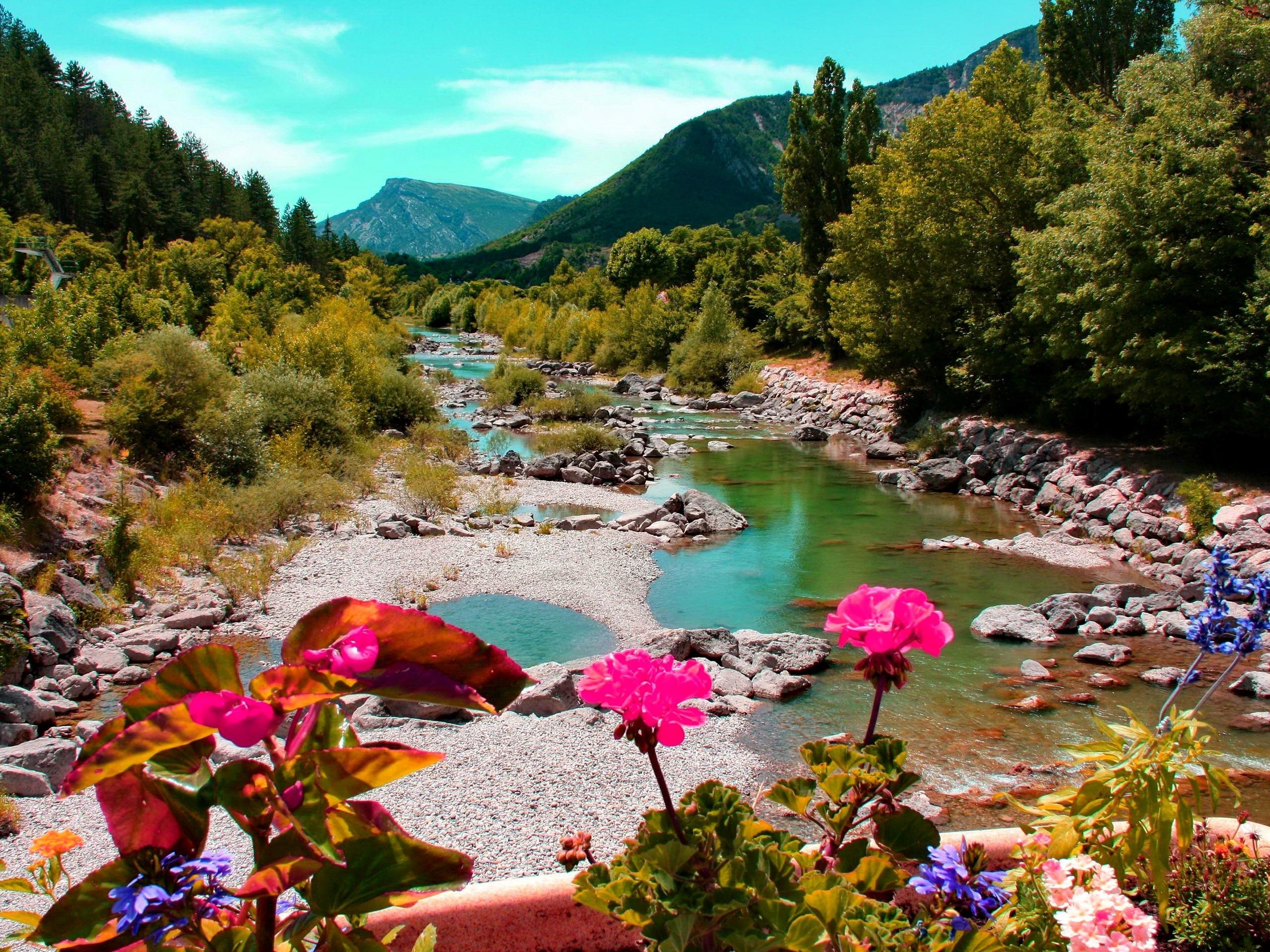 Rzeka, Kwiatki, Góry, Las