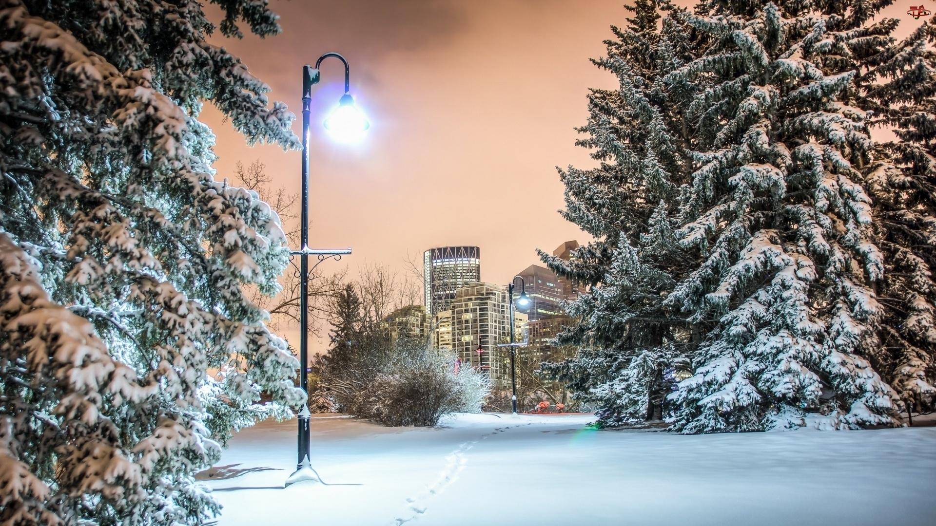 Lampa, Zima, Park
