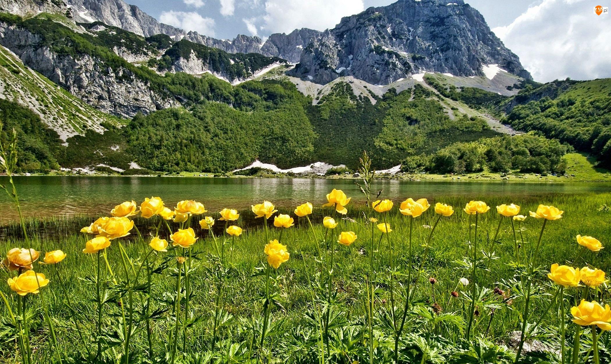 Łąka, Rzeka, Kwiaty, Góry