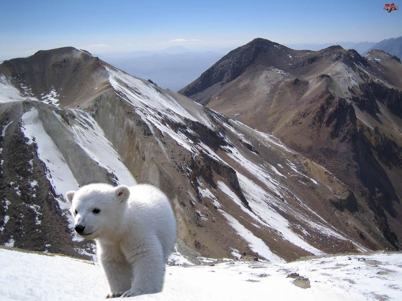 Mały, Śnieg, Niedzwiadek, Góry