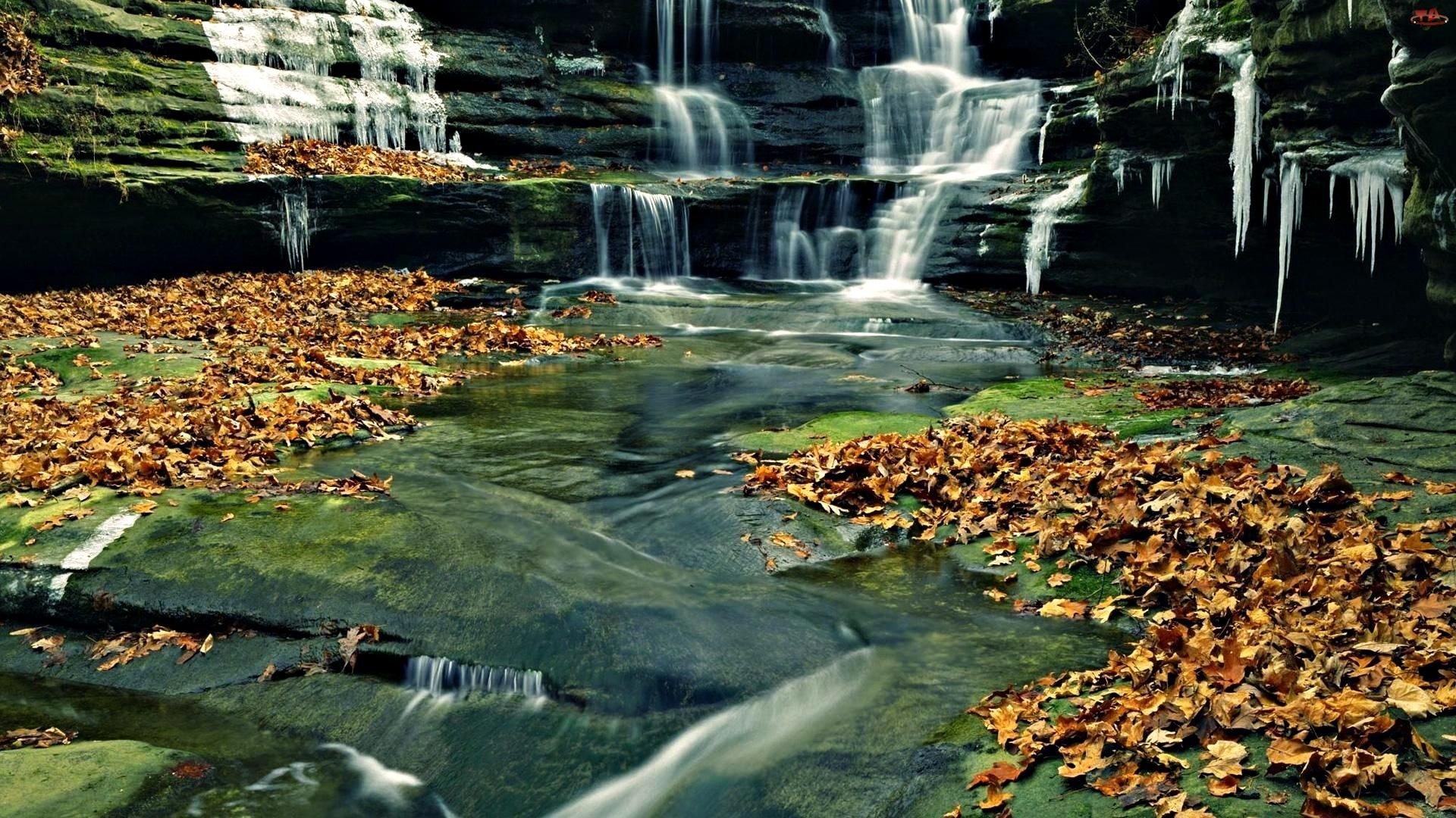 Liście, Wodospad, Opadłe