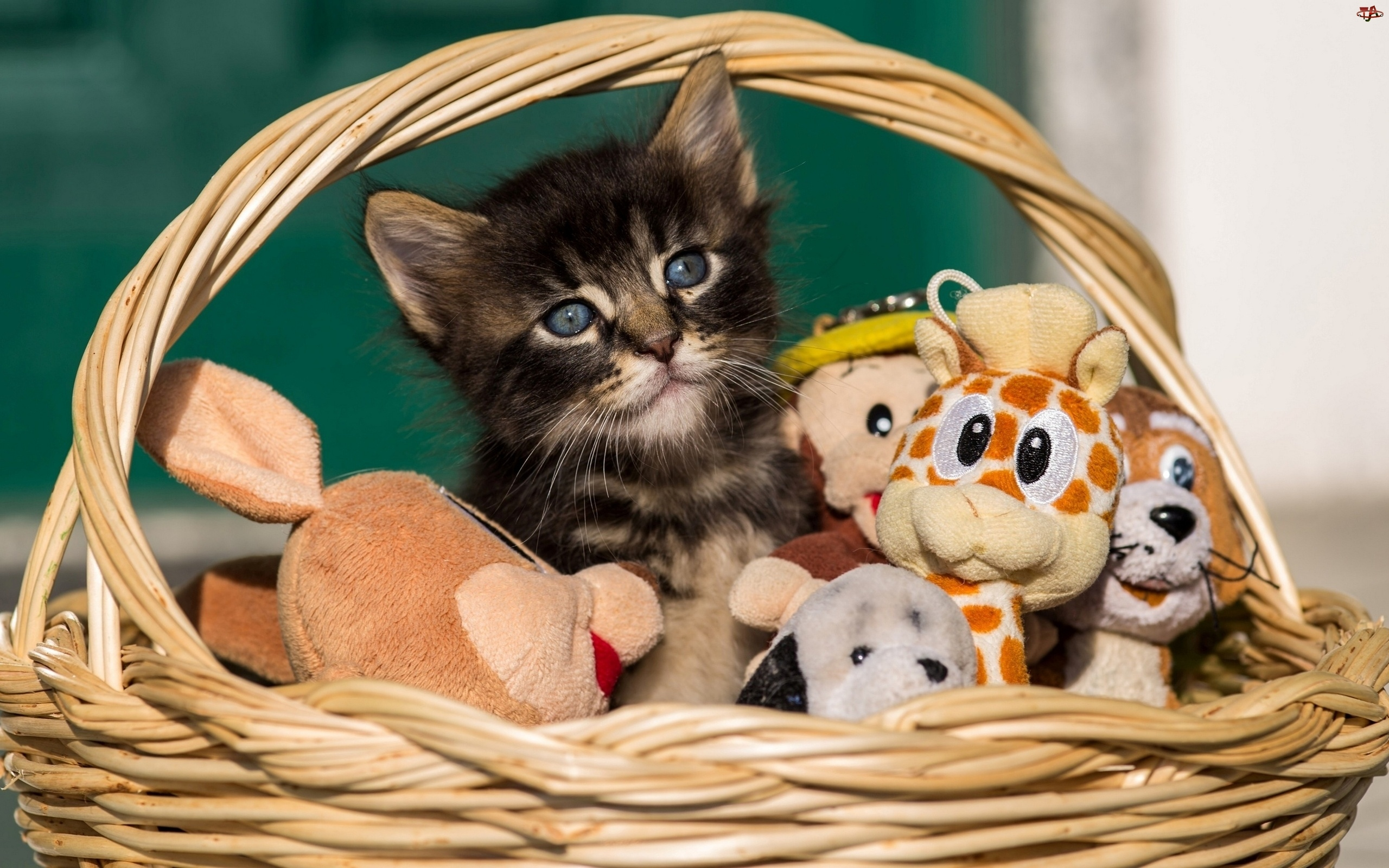 Zabawki, Mały, Kotek, Słodki, Koszyk