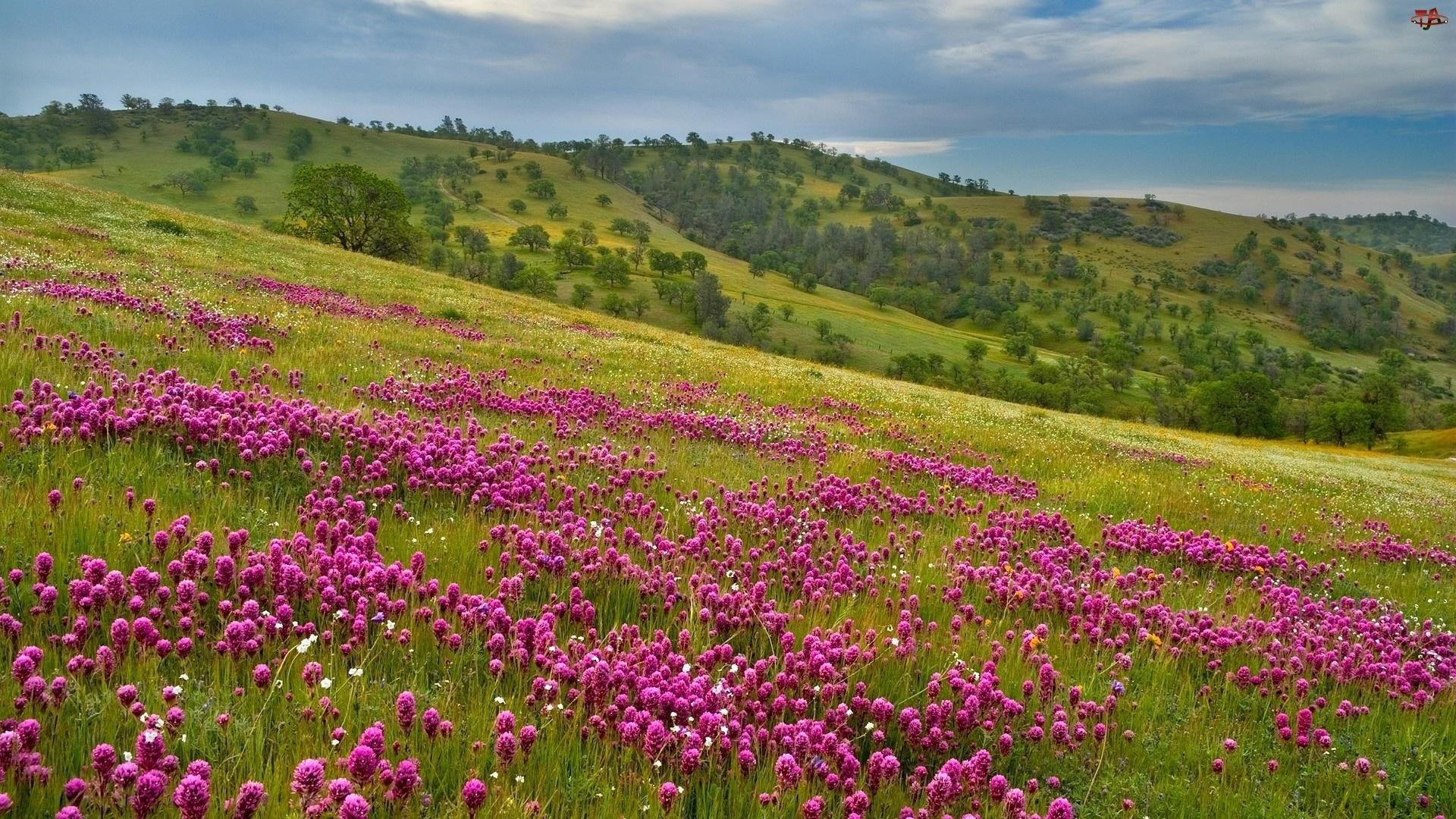 Kwiaty, Góra, Drzewa, Zbocze, Łąka