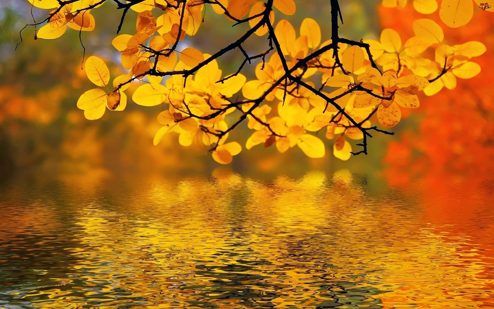 Światło, Drzewo, Rzeka, Gałąz, Przebijające