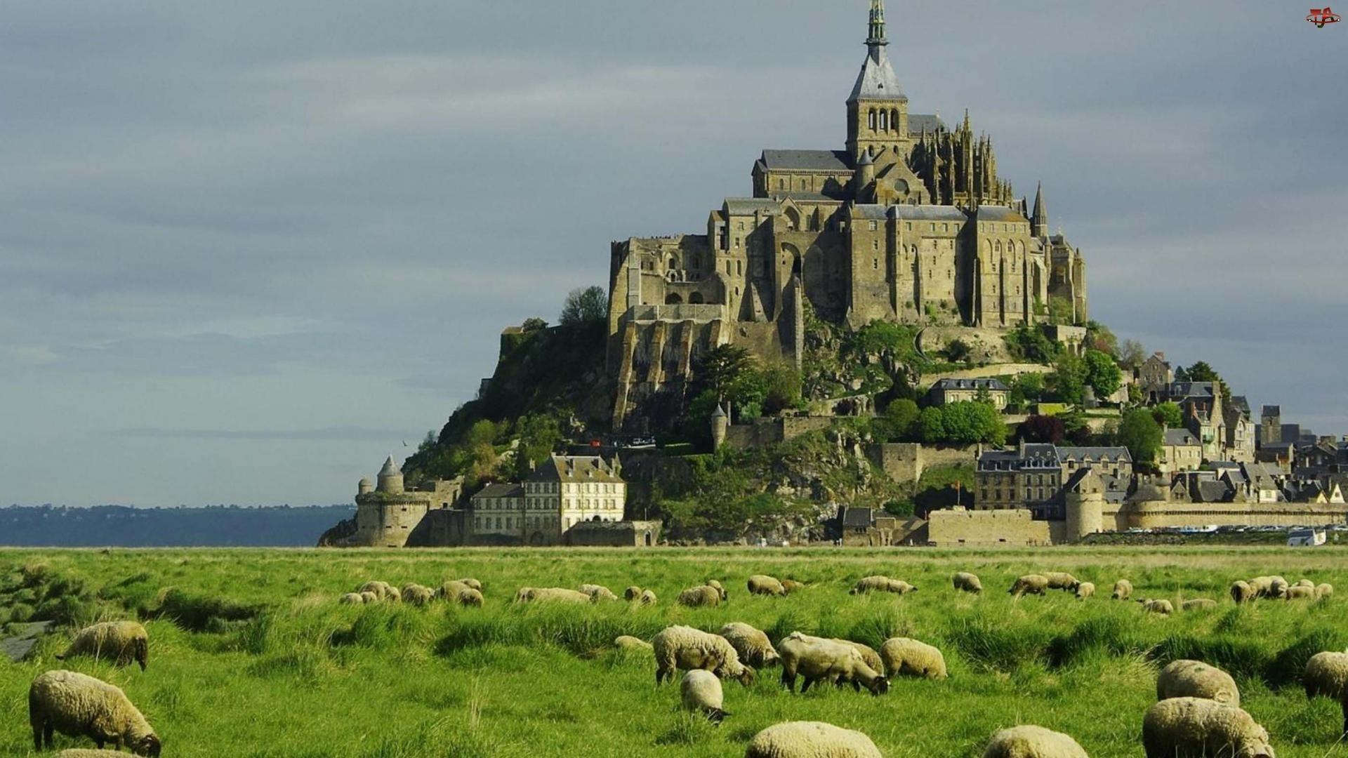 Francja, Klasztor, Owce, Łąka, Mount Saint Michel