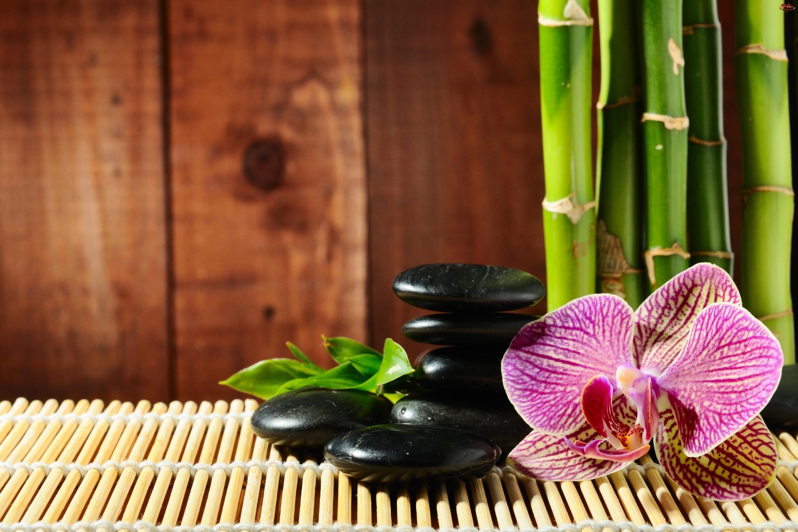 Storczyk, Bambus, Kamienie, Mata