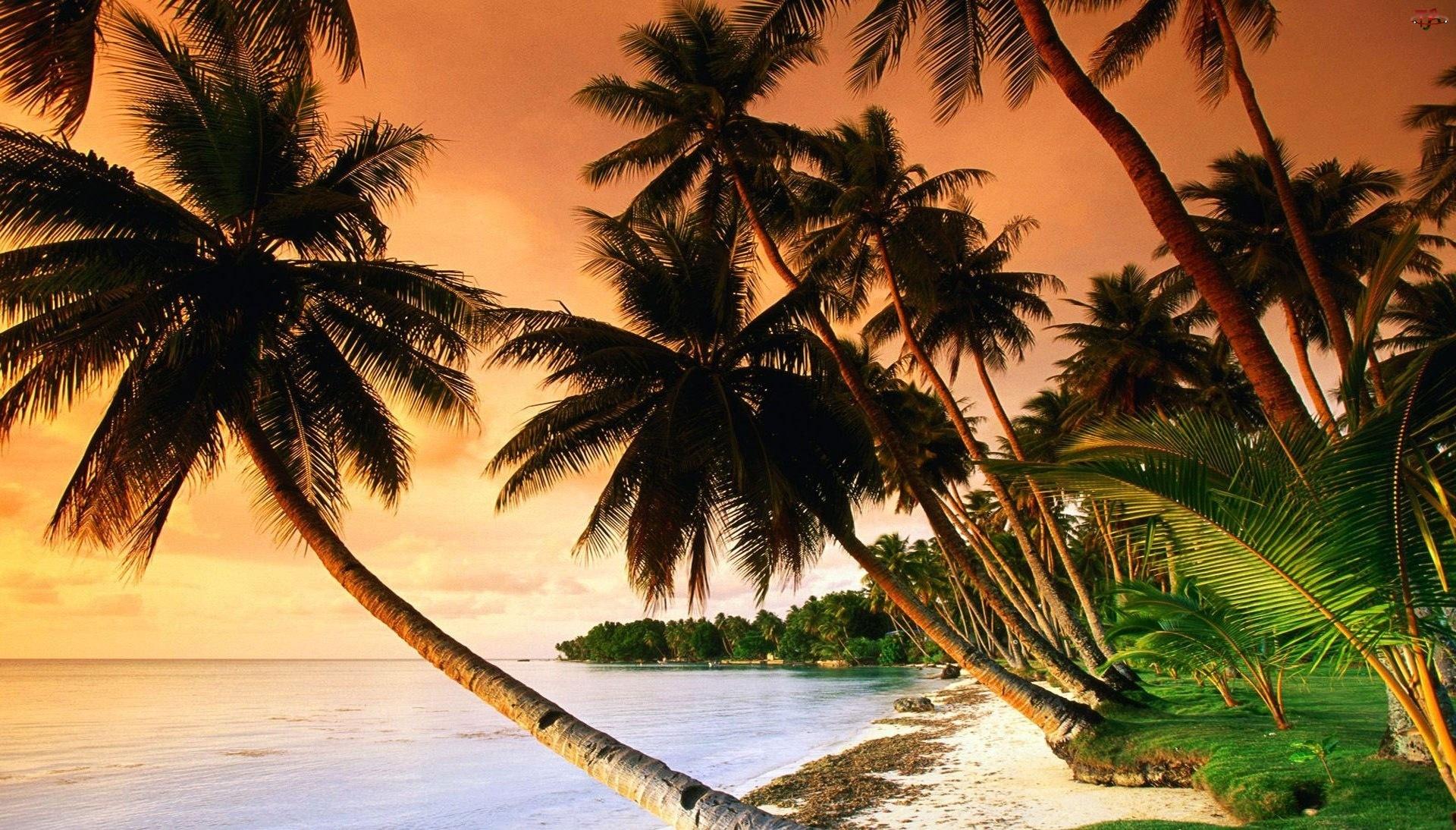 Morze, Palmy