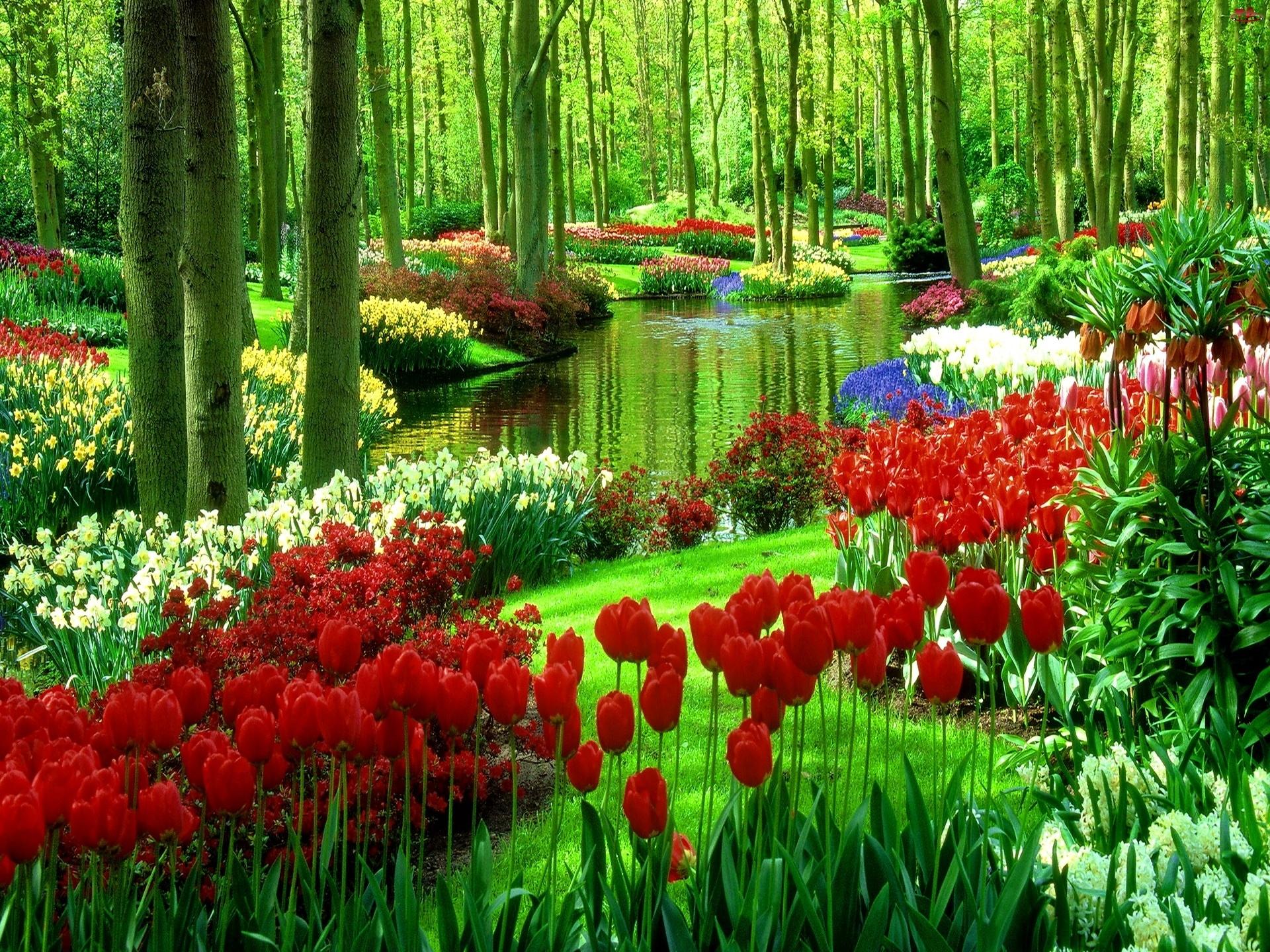 Woda, Las, Tulipany