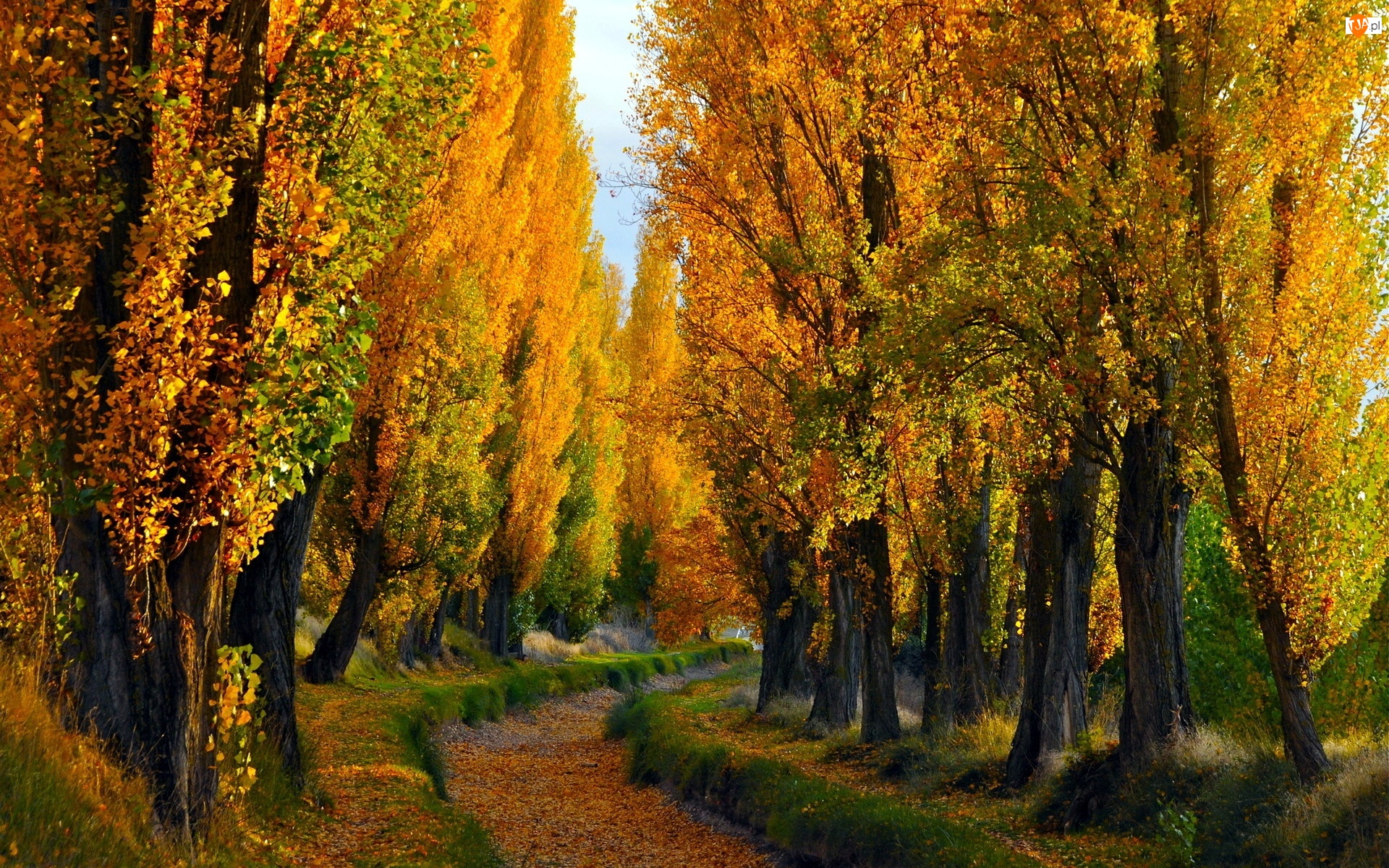 Topole, Jesień, Ścieżka