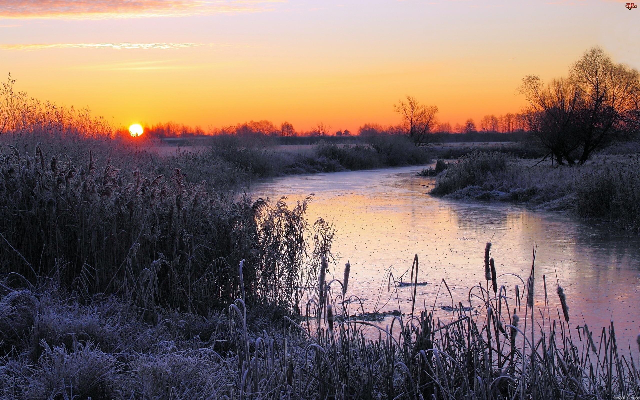 Krzewy, Słońca, Rzeka, Zima, Pola, Wschód
