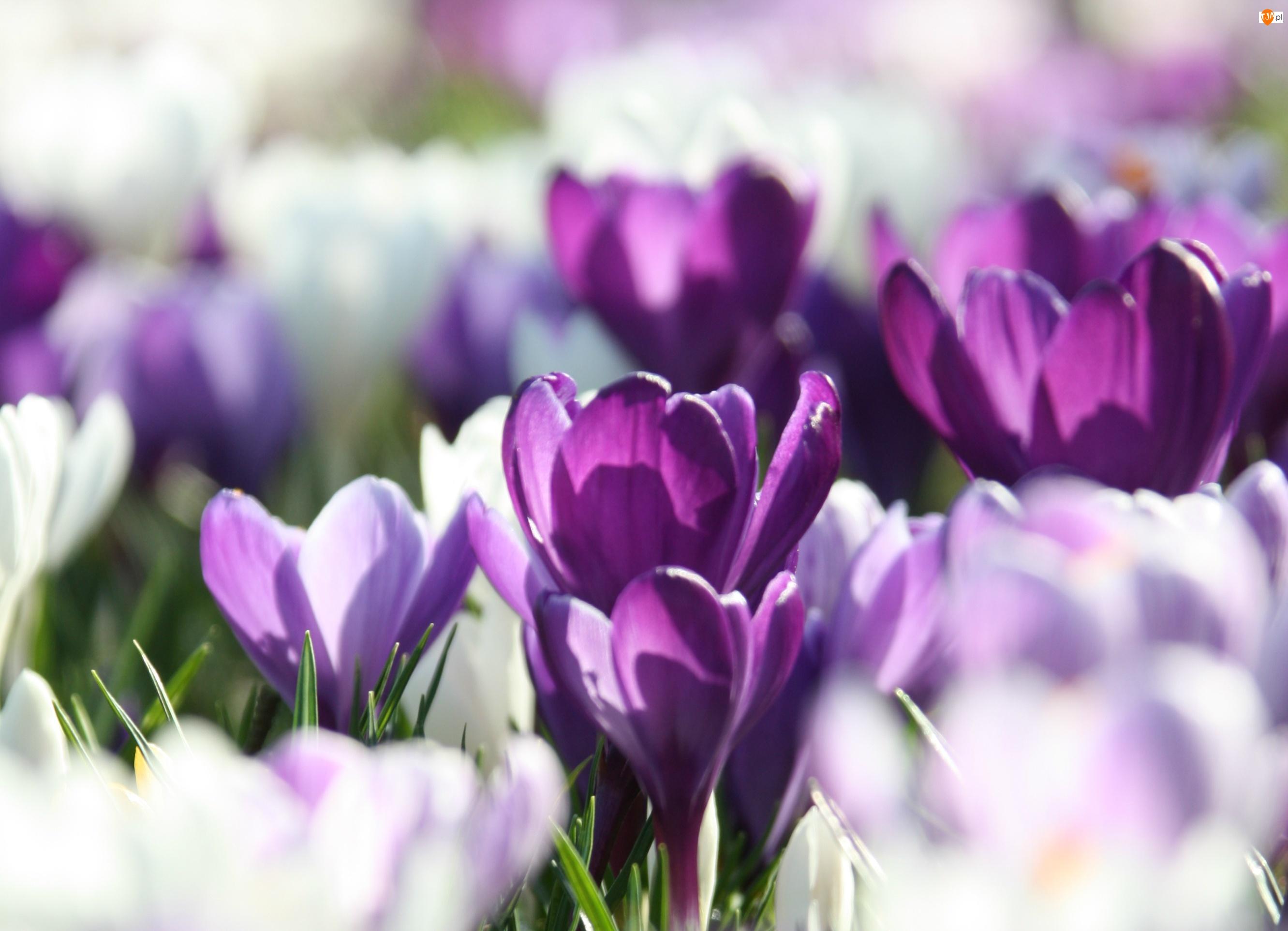 Цветы  windoworldru