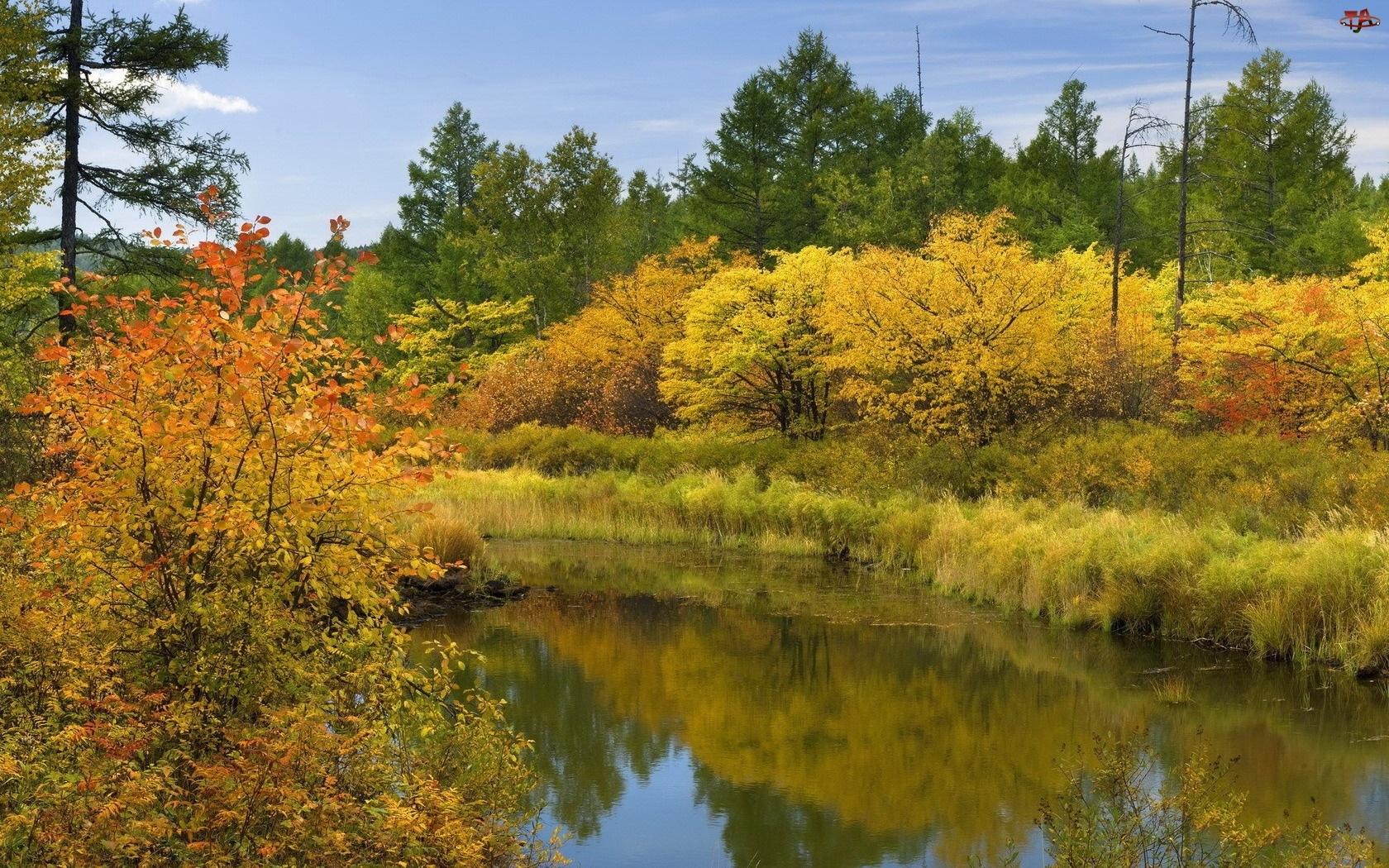 Drzewa, Jesień, Rzeka