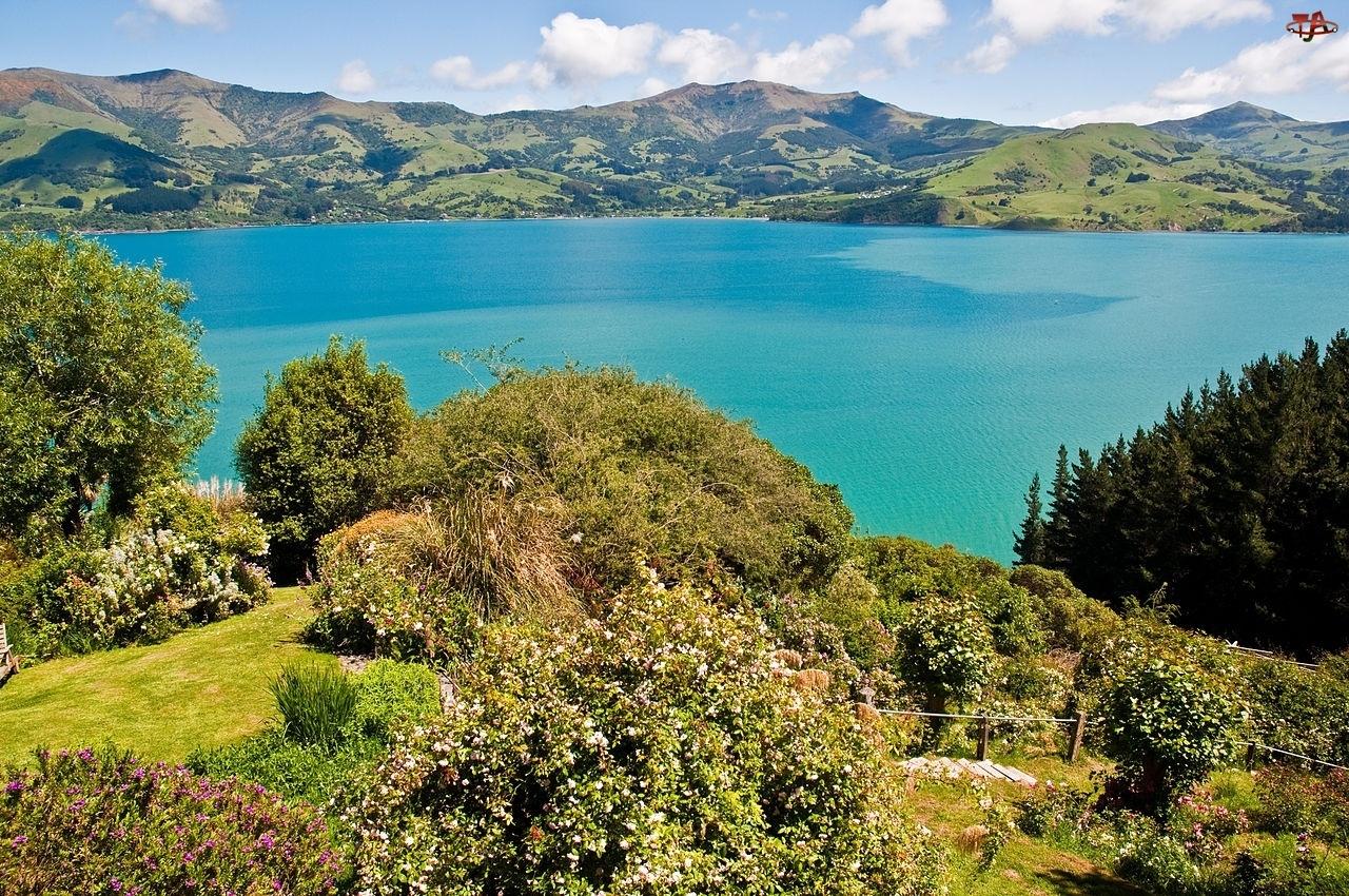 Jezioro, Nowa Zelandia, Góry, Roślinność
