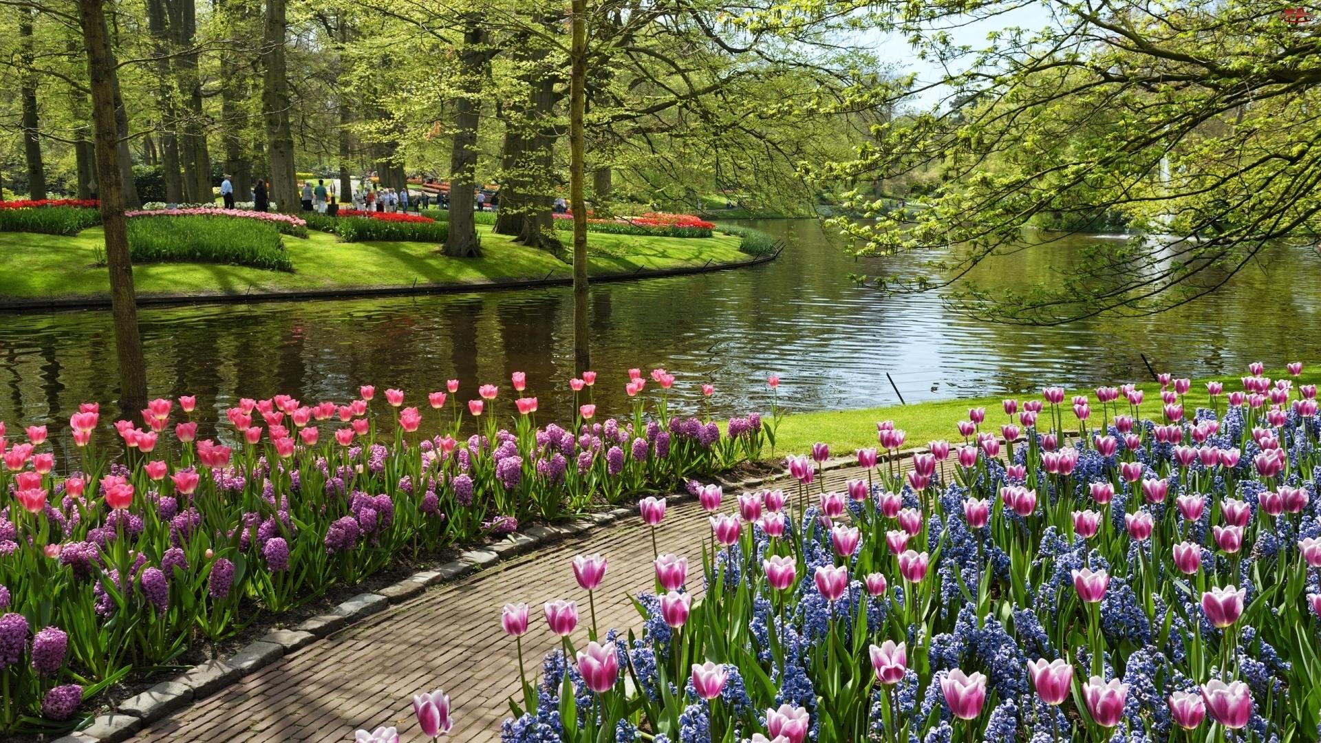 Ścieżka, Park, Drzewa, Rzeka, Tulipany