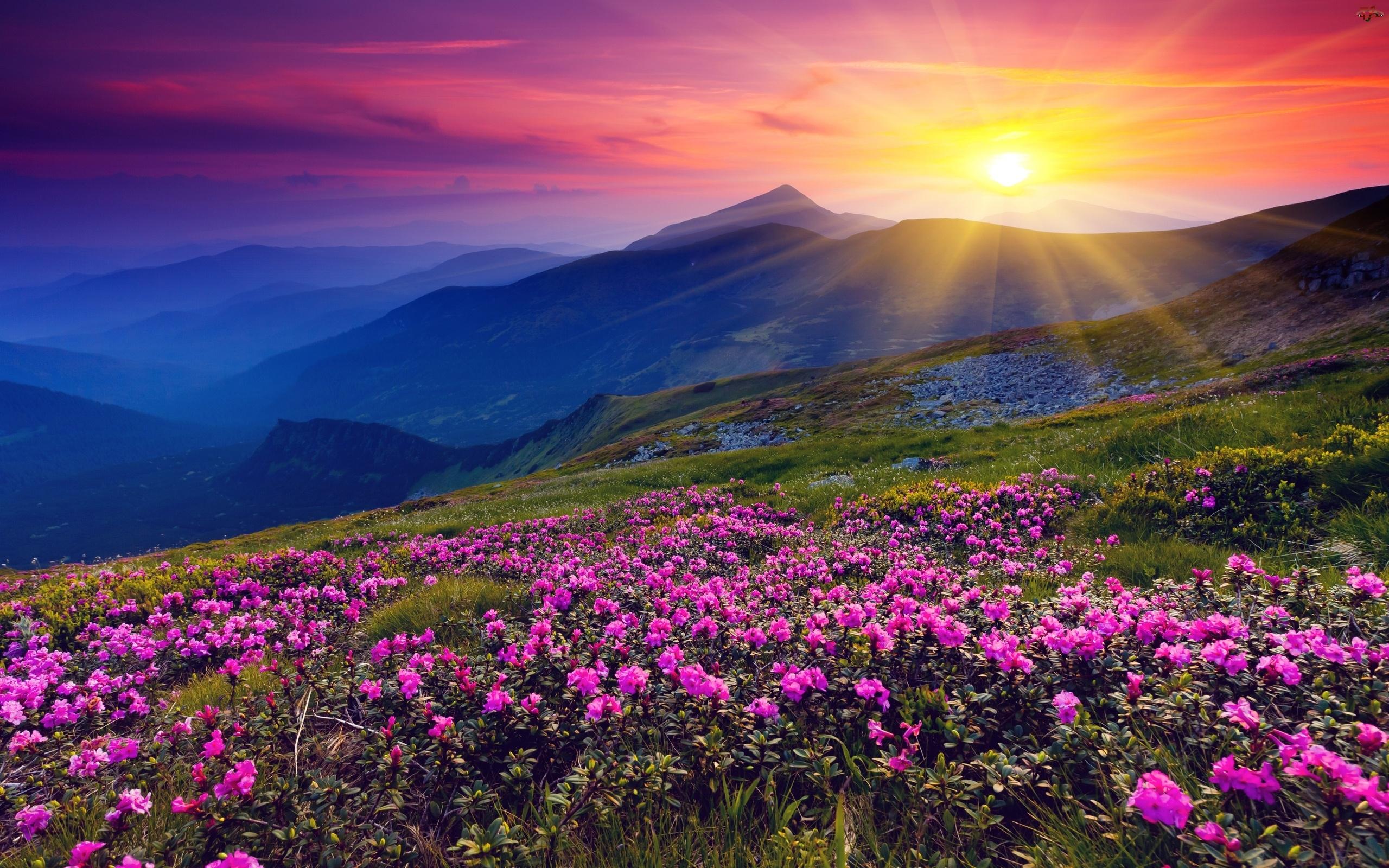 Góry, Miniaturki, Zachód Słońca, Rododendrony