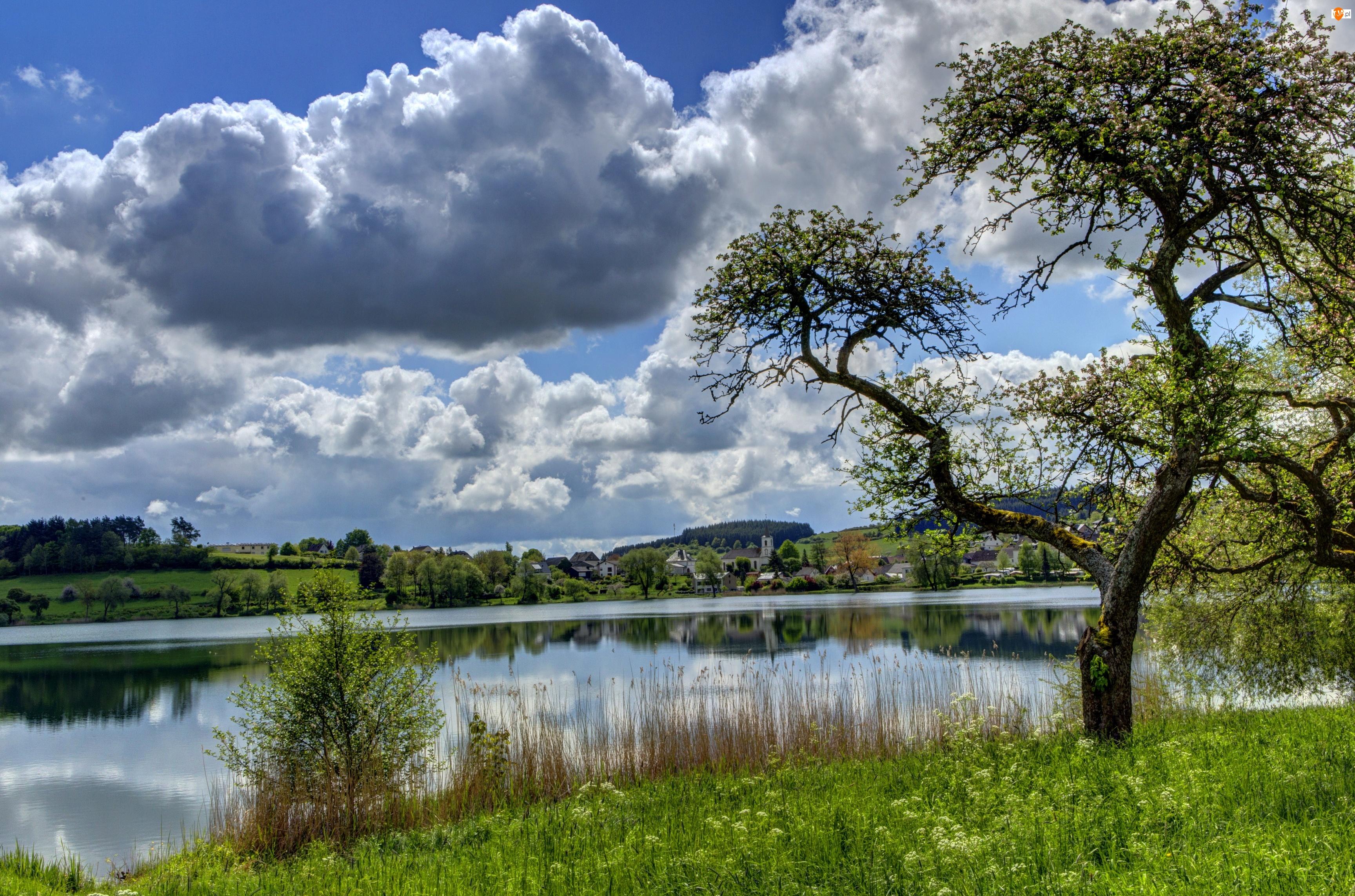 Rzeka, Trawa, Chmury, Drzewa