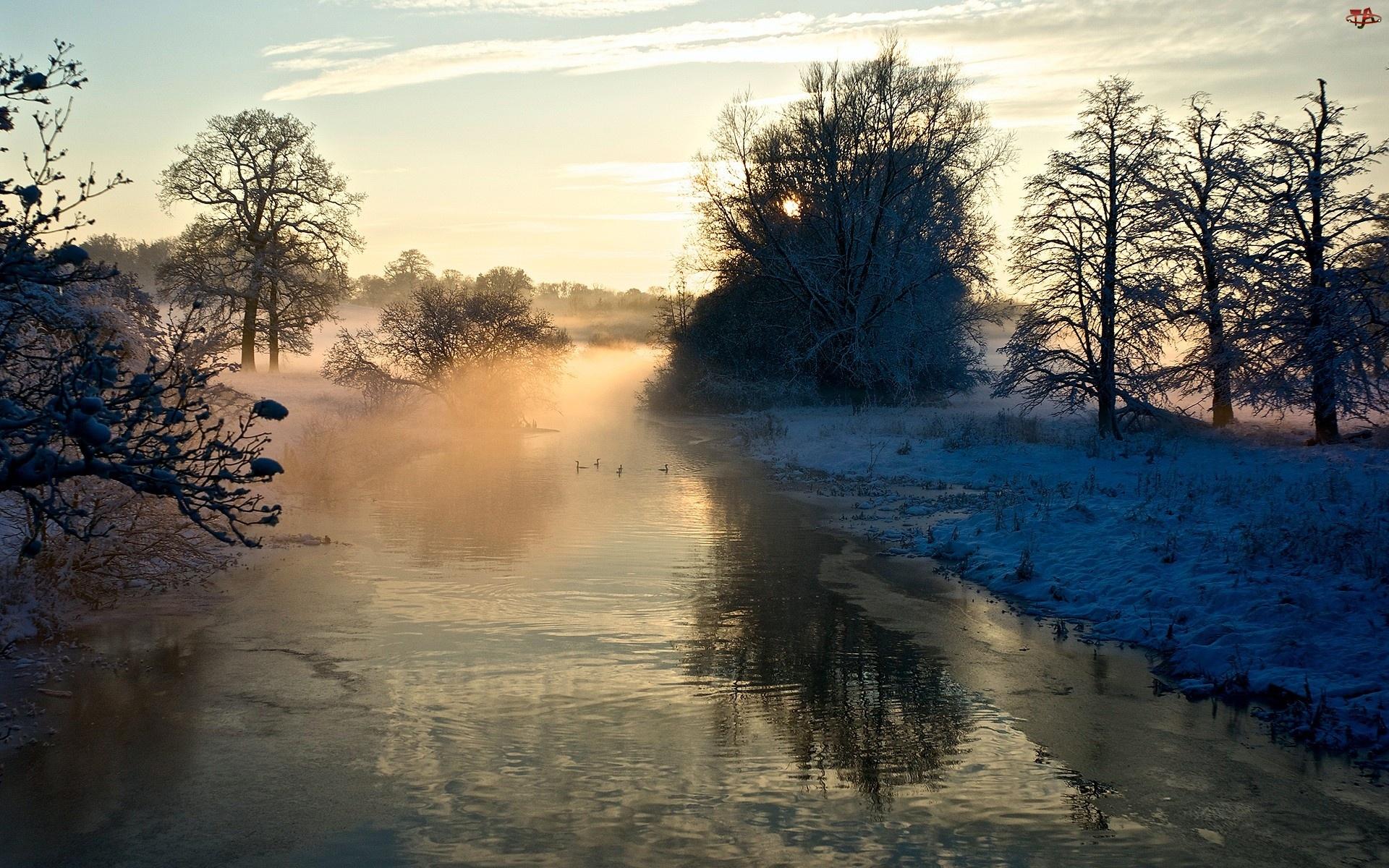 Zima, Rzeka, Mgła, Drzewa, Kaczki