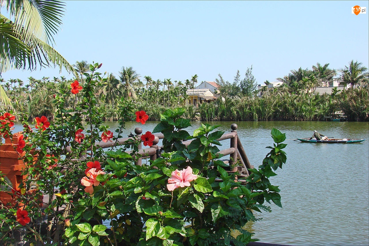 Palmy, Rzeka, Kwiatki