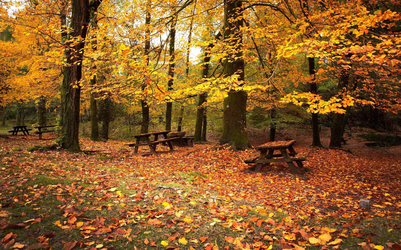 Jesień, Park, Liście, Ławeczki, Drzewa
