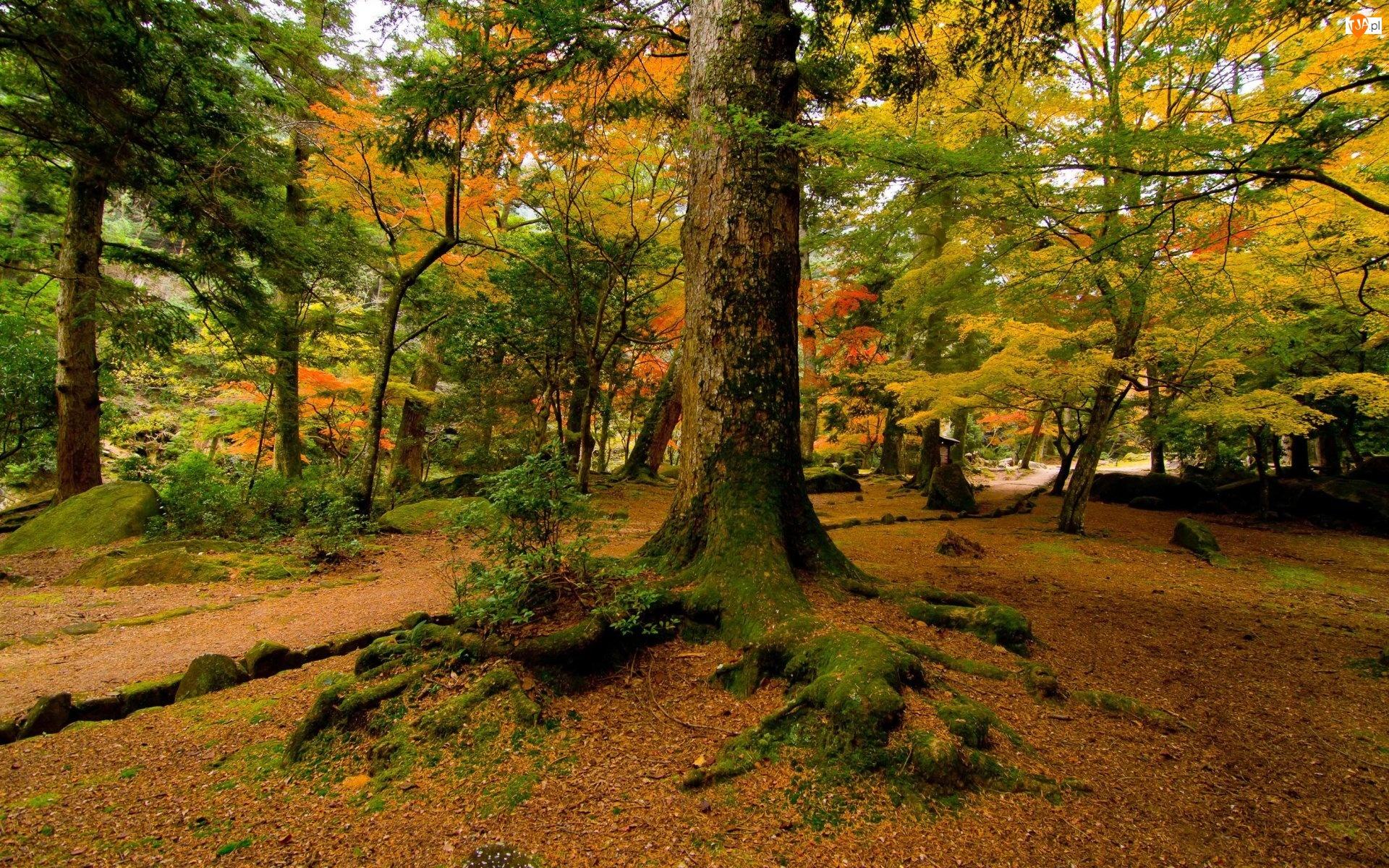 Korzenie, Jesień, Drzewa